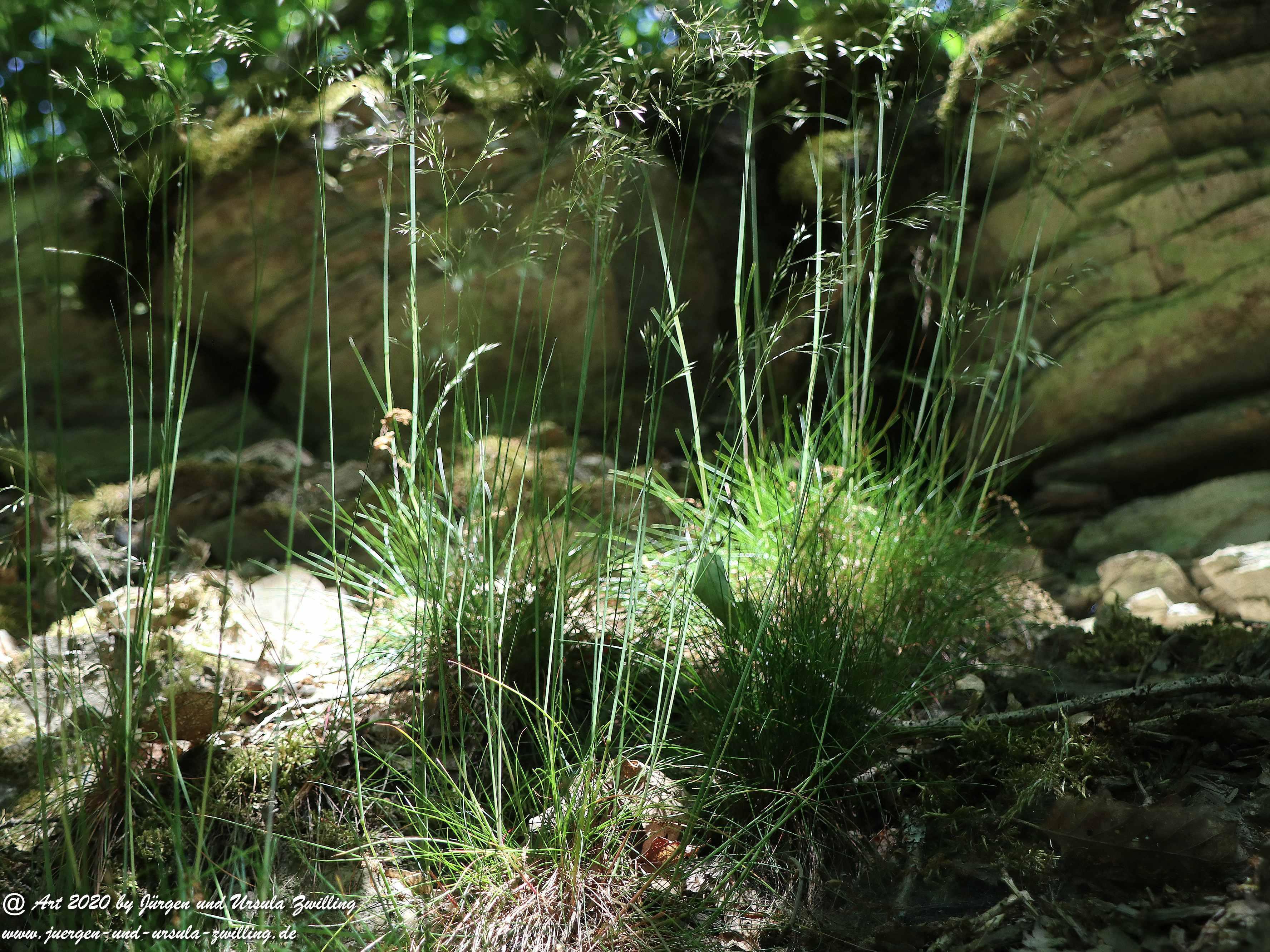 Wispertalsteig Wisper Trail 4