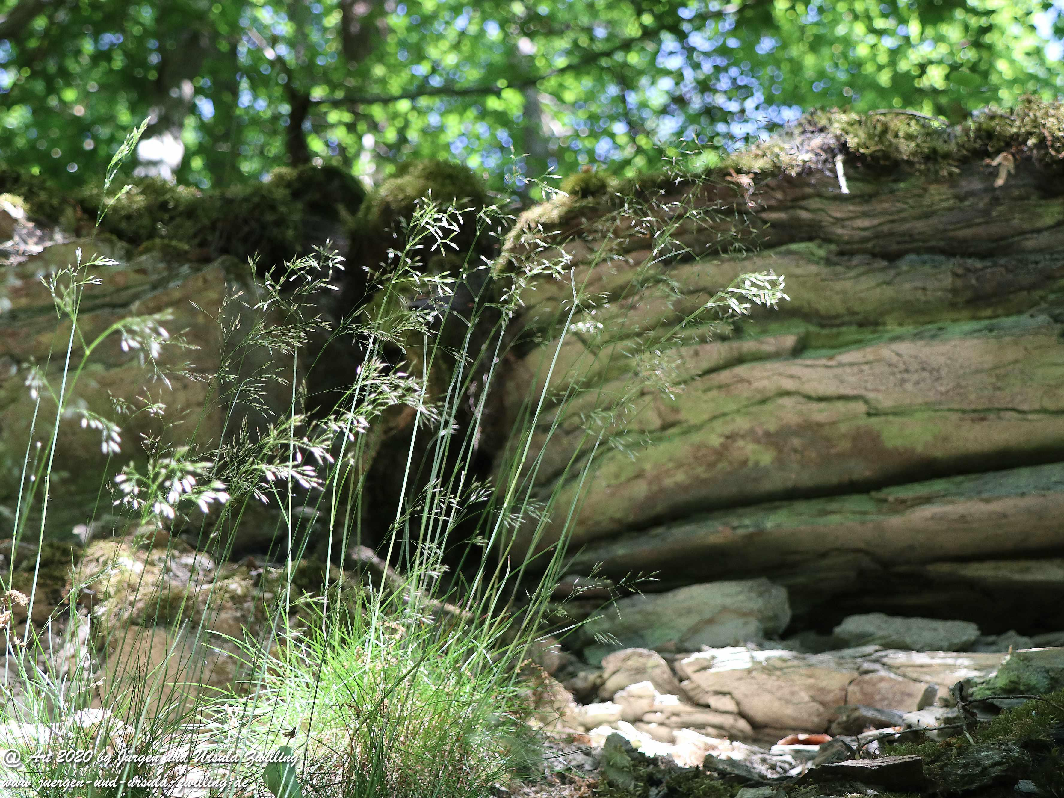 Wispertalsteig Wisper Trail 5