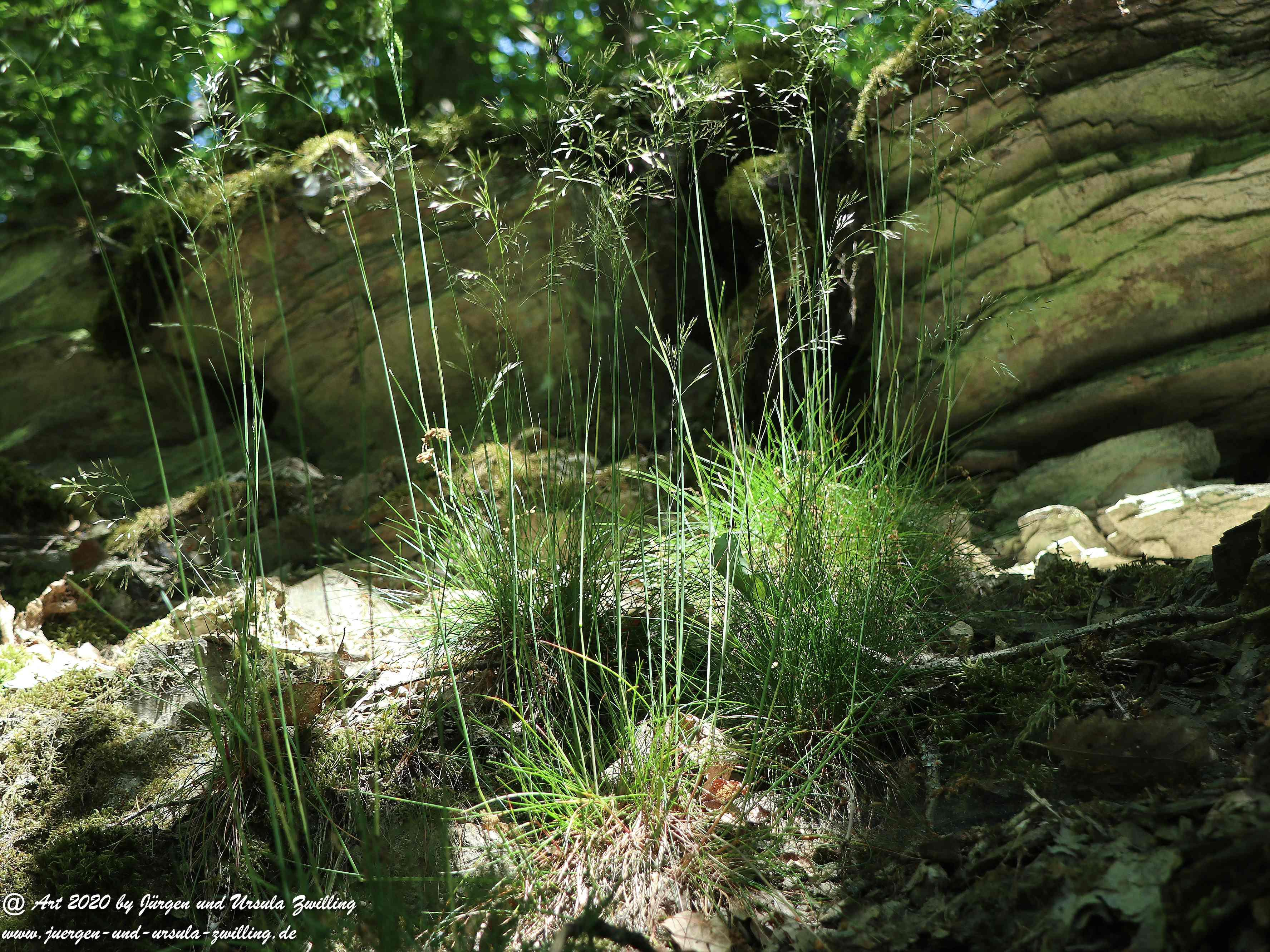 Wispertalsteig Wisper Trail 7