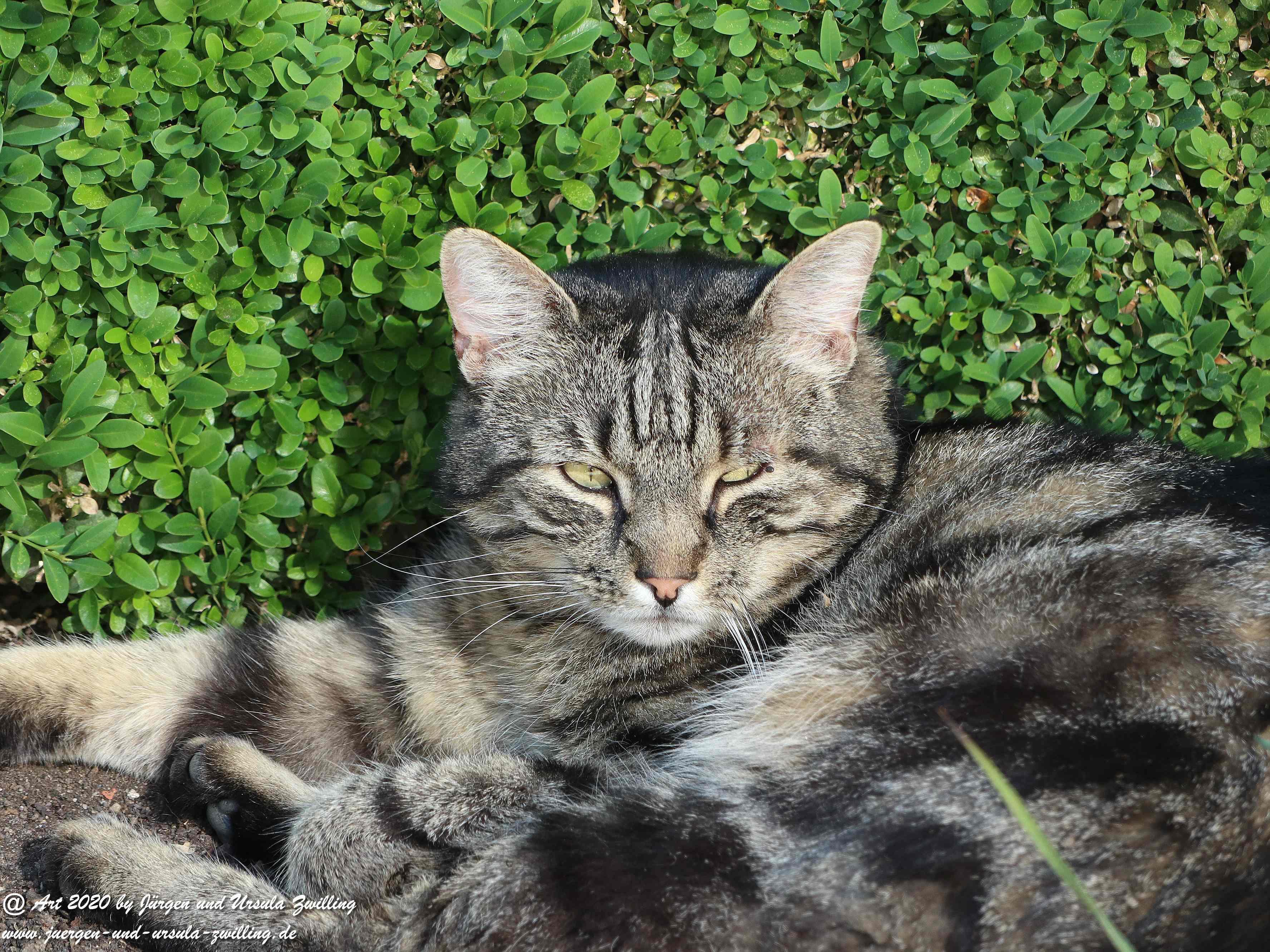 Katze Mimi 28