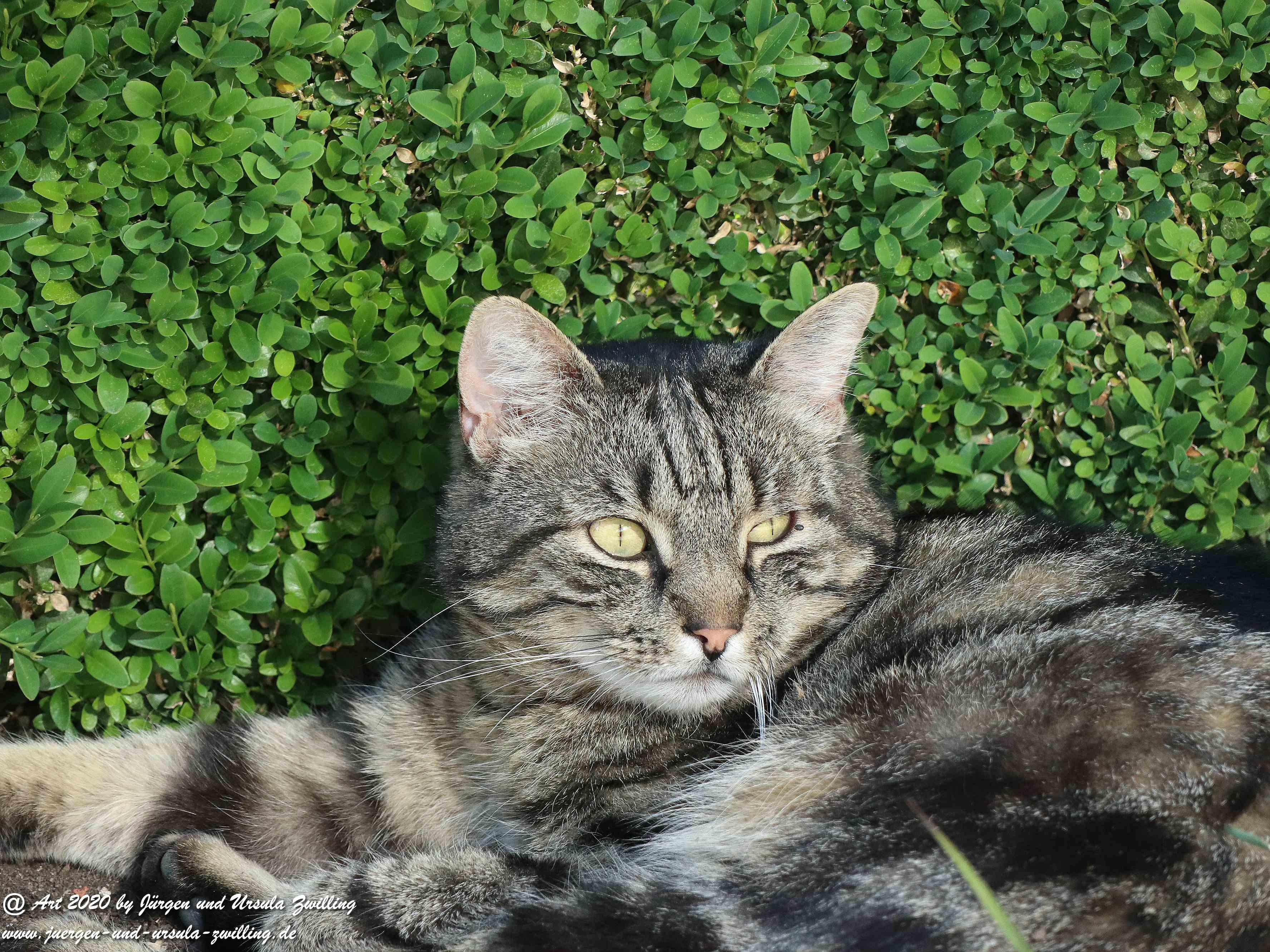 Katze Mimi 29