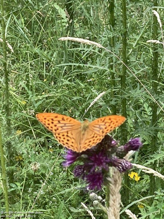 Schmetterlinge - Ober Olmer Wald - Rheinhessen