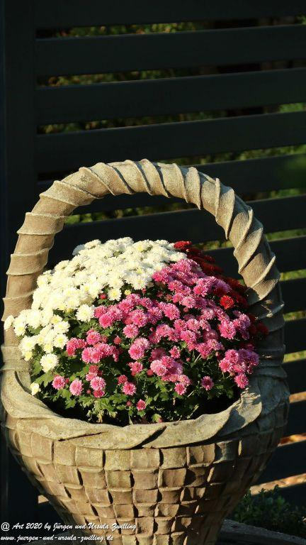 Gartenblick Septembermorgen