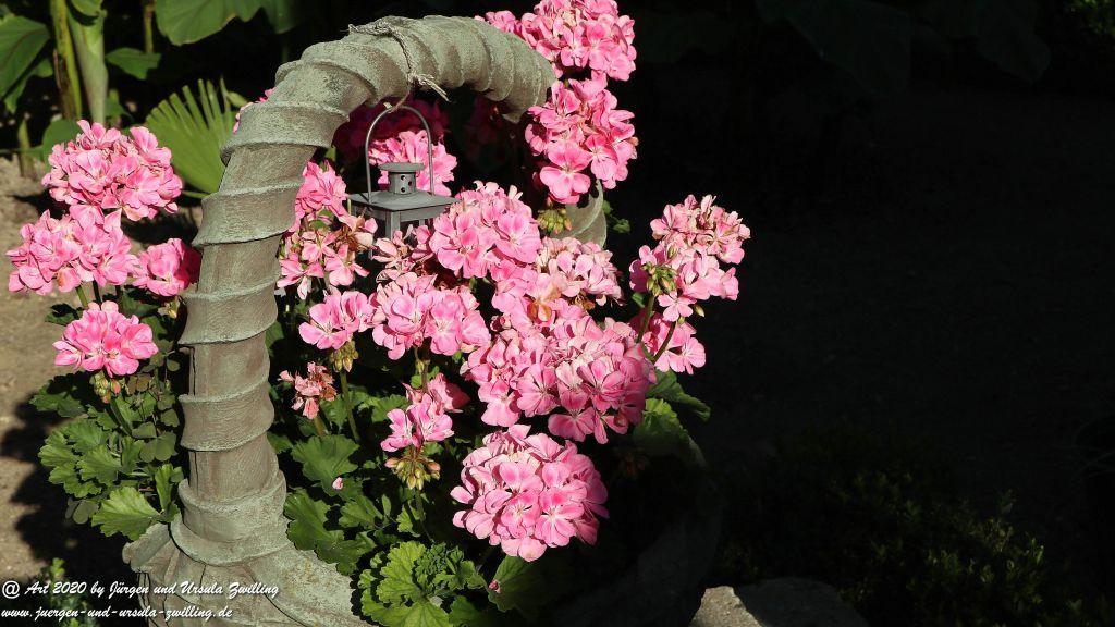 Geranie im Korb -  Pelargonie (Pelargonium)
