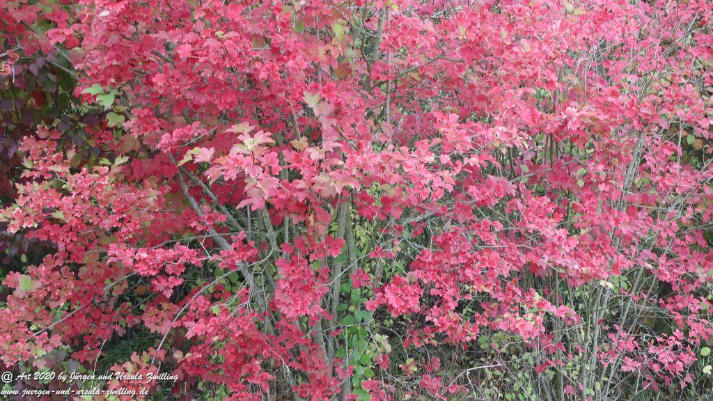 Herbst in Rheinhessen