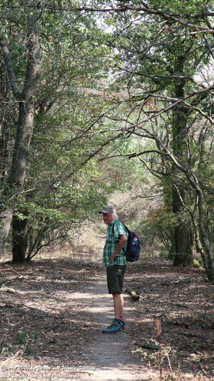Philosophische Bildwanderung  In Vino Veritas Wisper Trail - Taunus