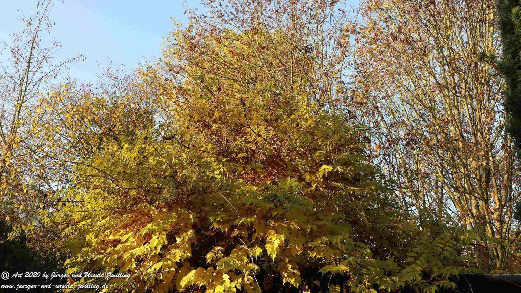 November - Morgen im Garten