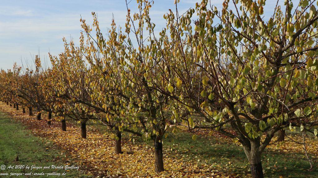 November in Rheinhessen