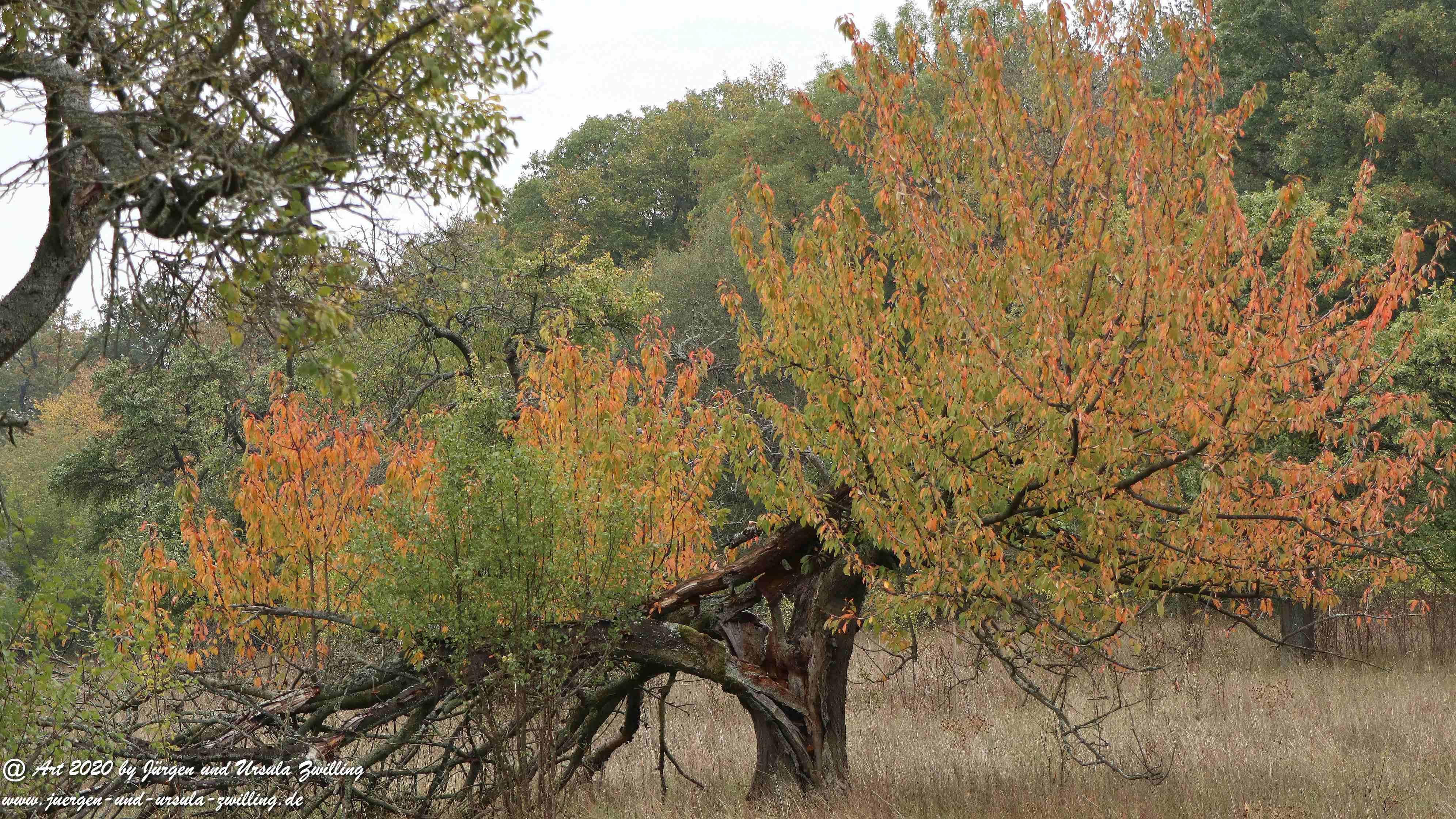 Herbst im Ober Olmer Wald 7
