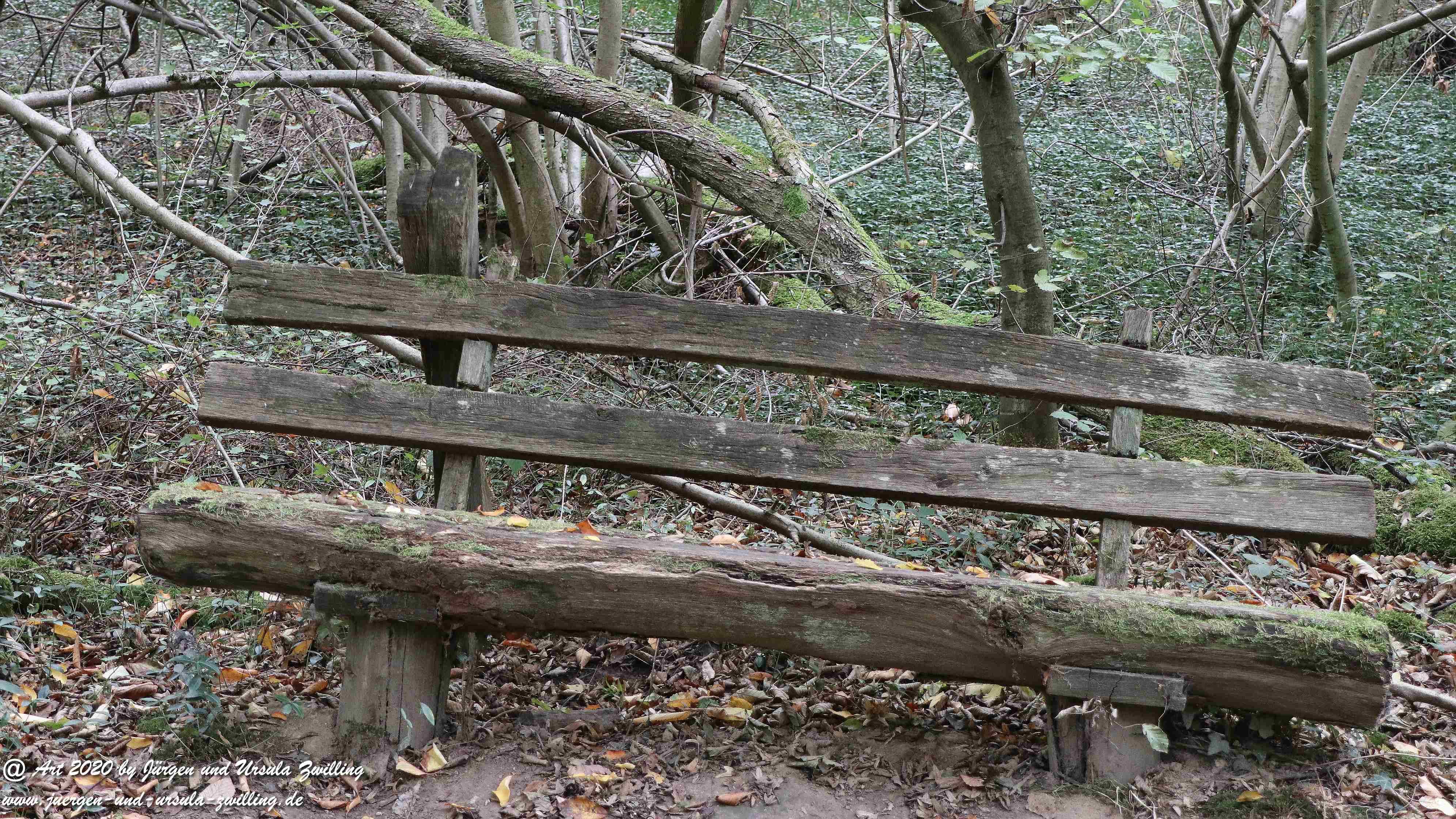 Herbst im Ober Olmer Wald 10