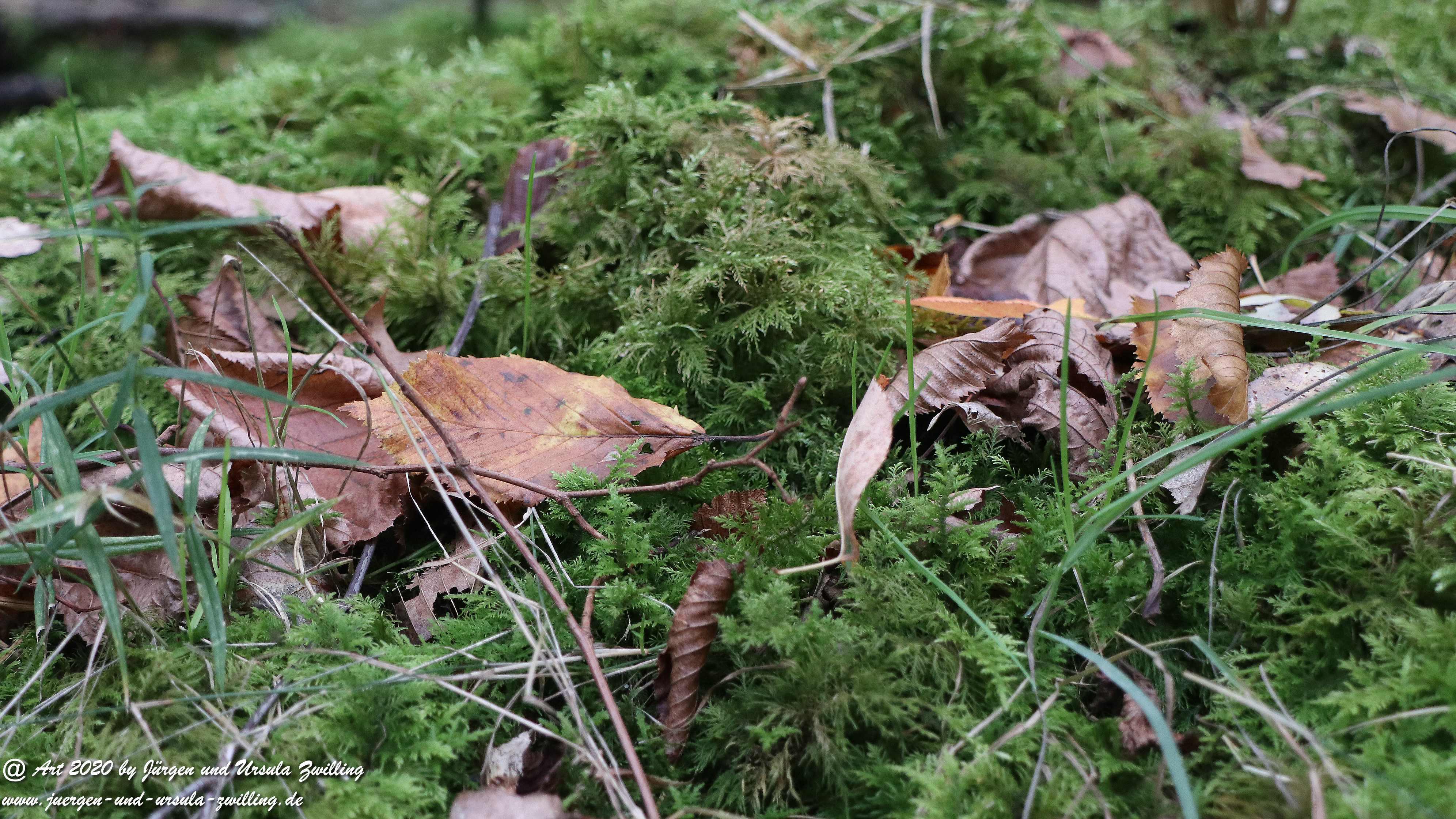 Herbst im Ober Olmer Wald 12
