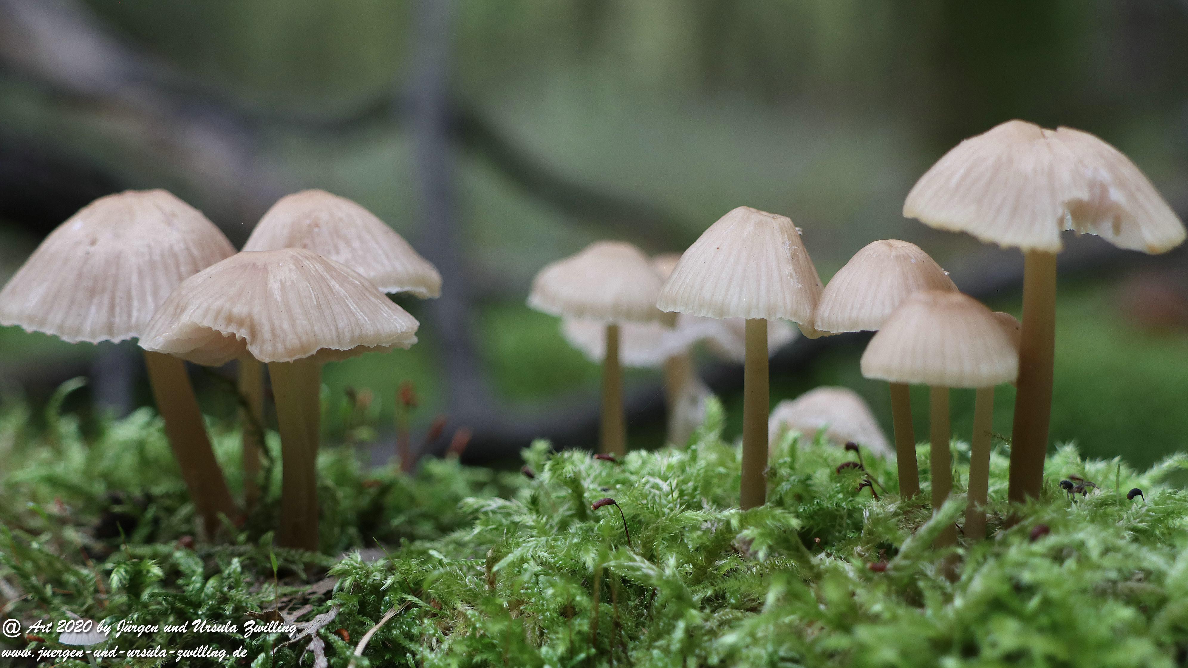 Herbst im Ober Olmer Wald 14