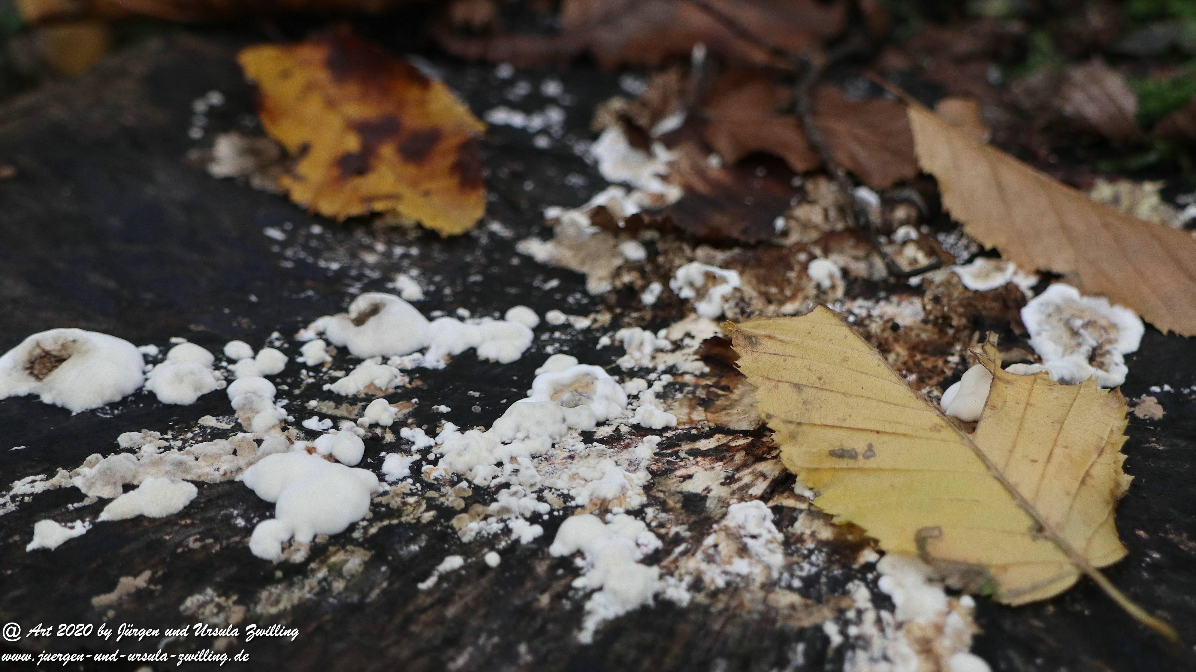 Herbst im Ober Olmer Wald 30
