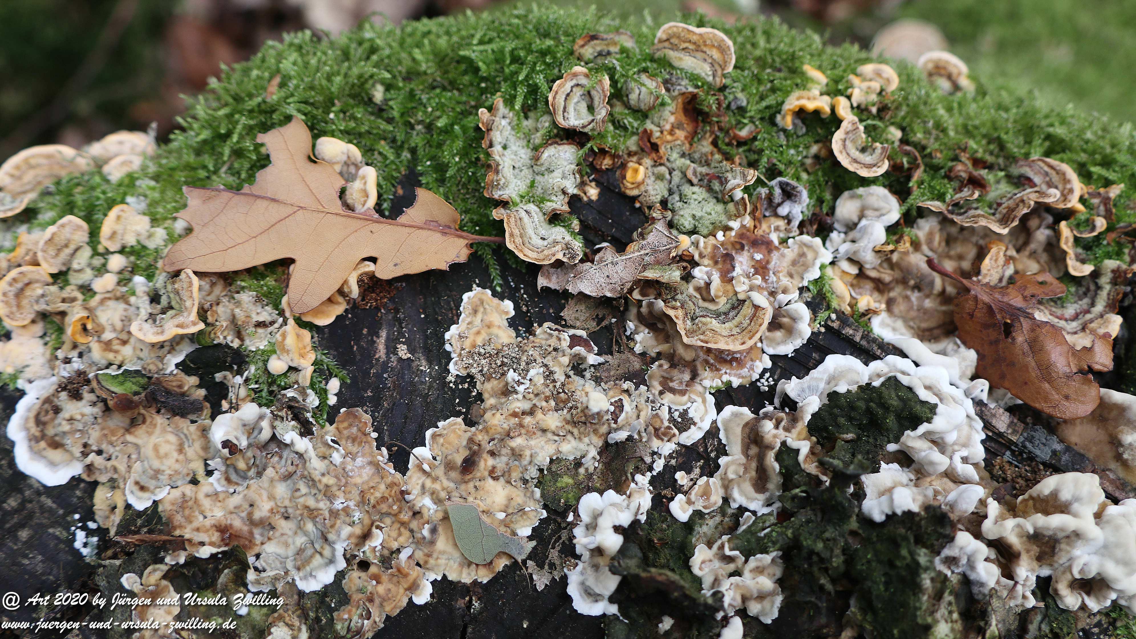 Herbst im Ober Olmer Wald 39