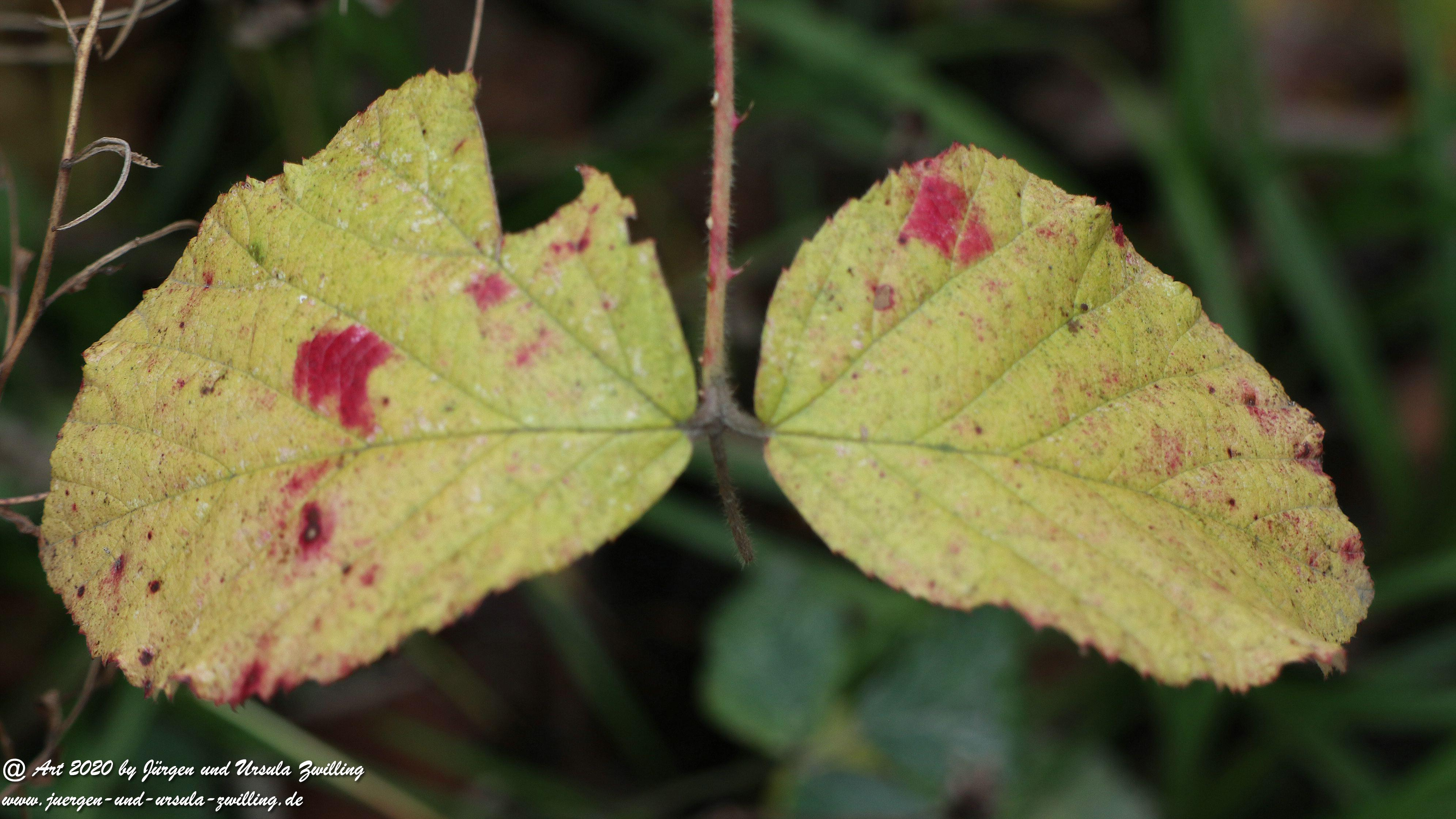 Herbst im Ober Olmer Wald 43