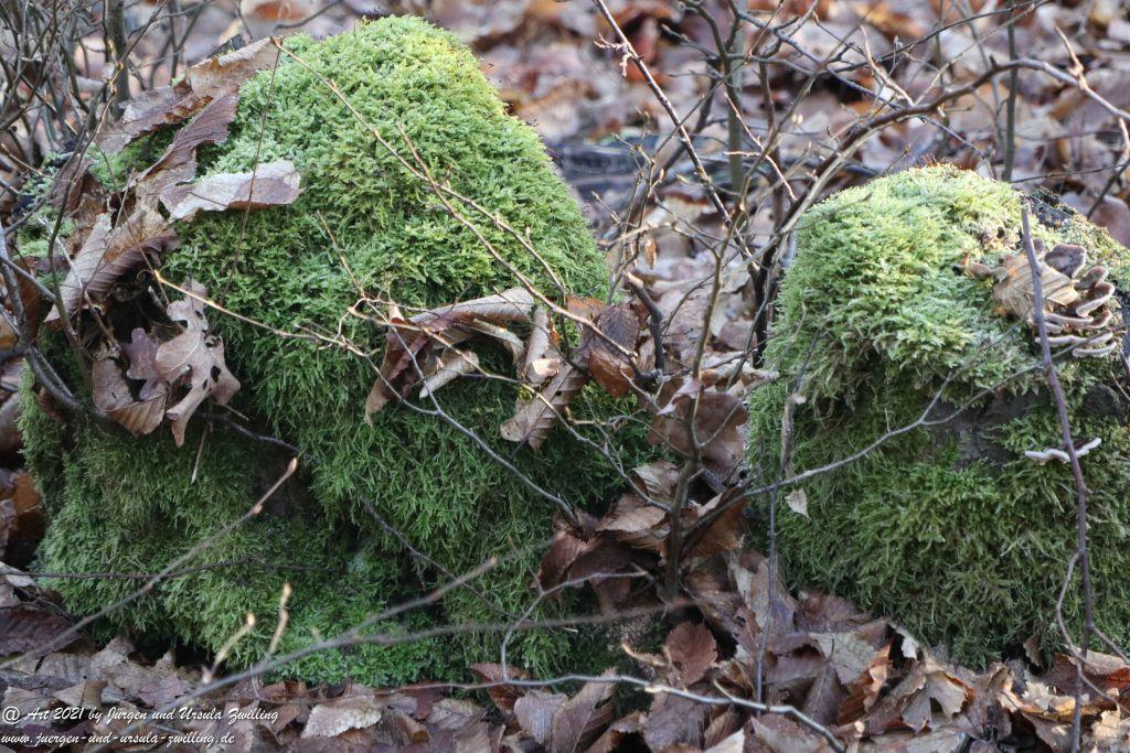 Neujahr in Rheinhessen - Felder  Mainz Finthen - Ober Olmer Wald - Rheinhessen