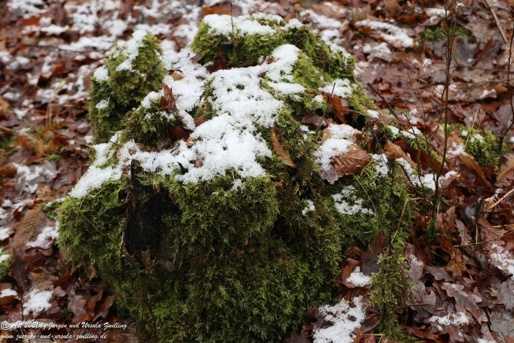 Rheinhessische Winterimpressionen - Ober Olmer Wald - Rheinhessen