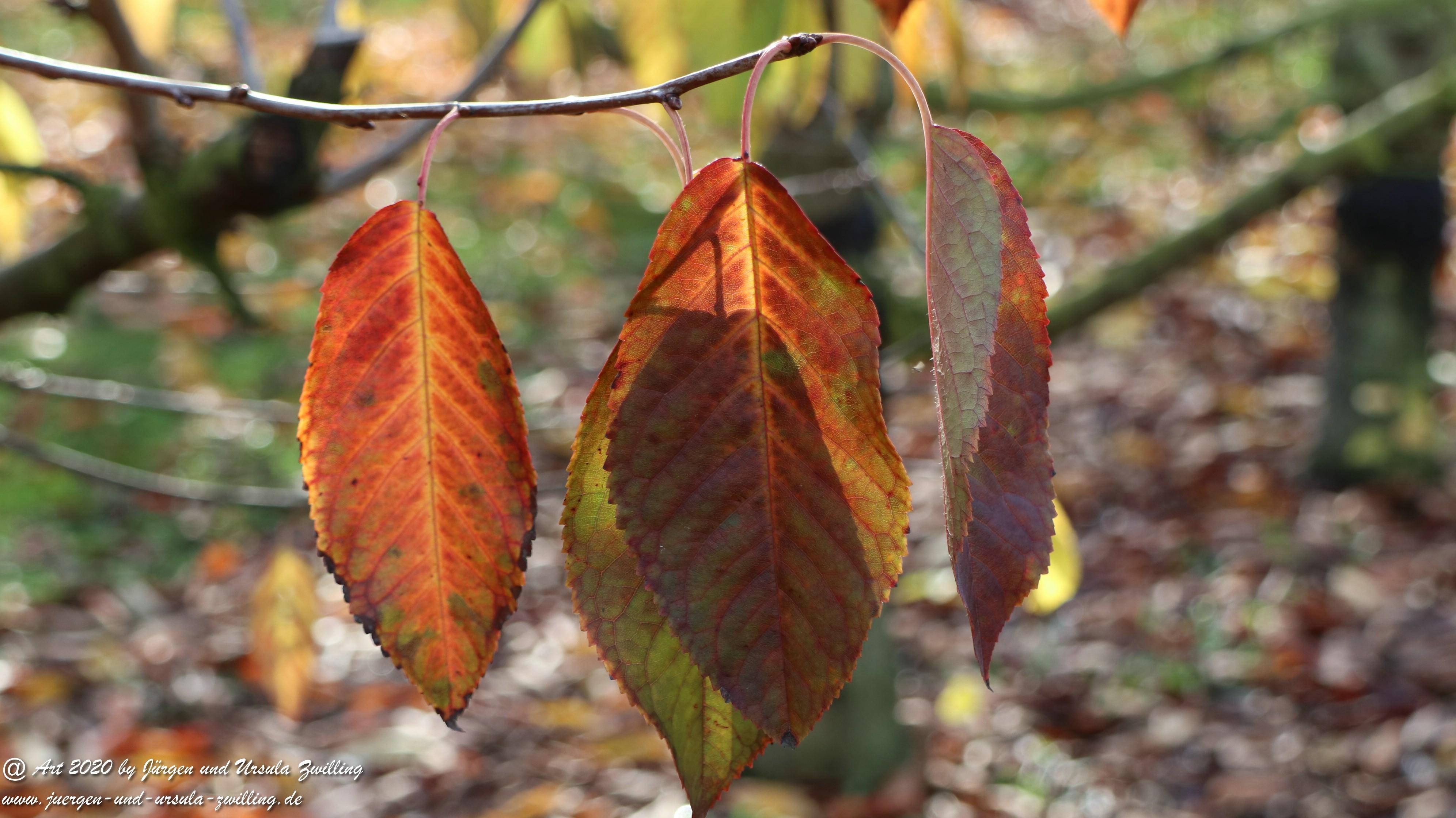 November in Rheinhessen 10