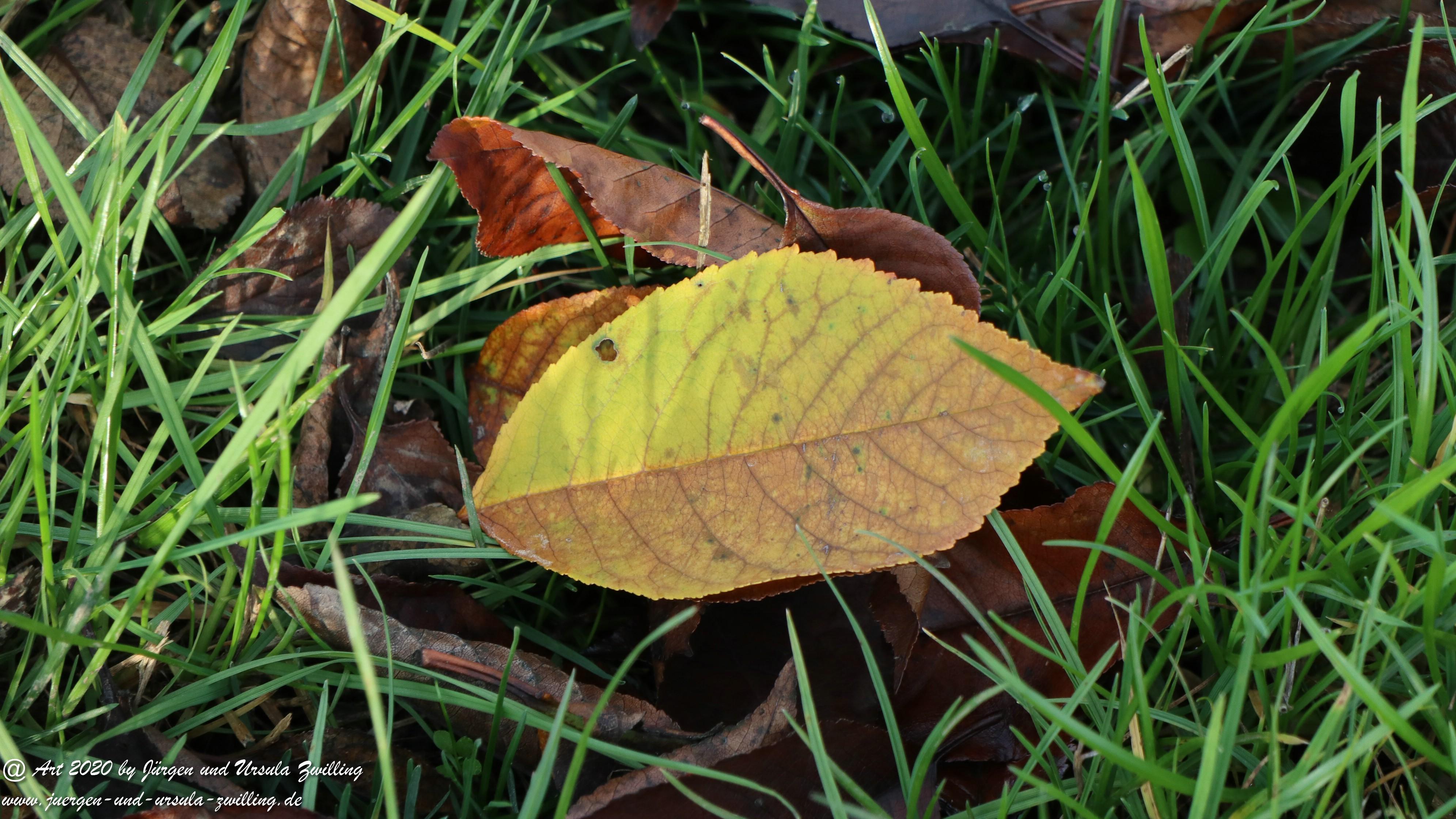 November in Rheinhessen 25