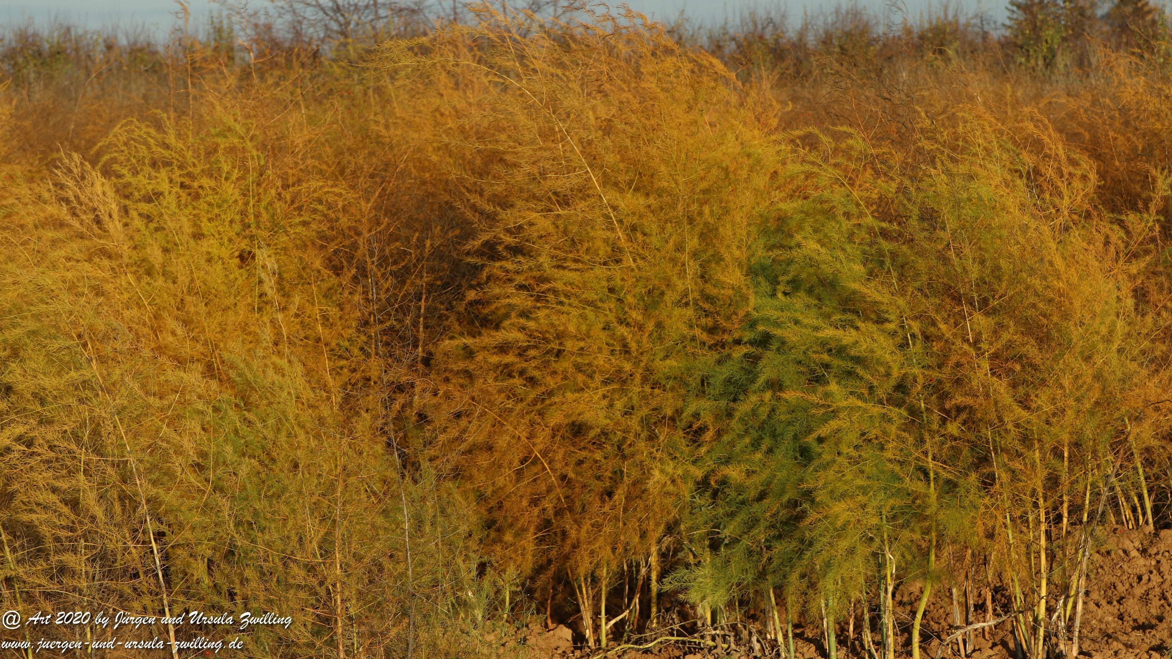 November in Rheinhessen 27