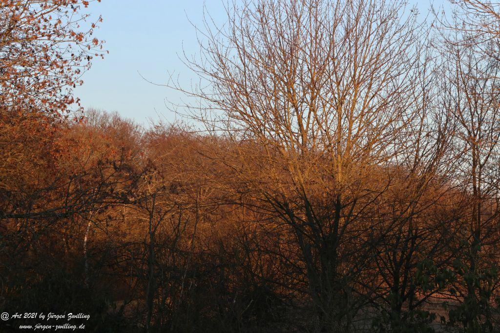 Sonniger März-Morgen - Rheinhessen