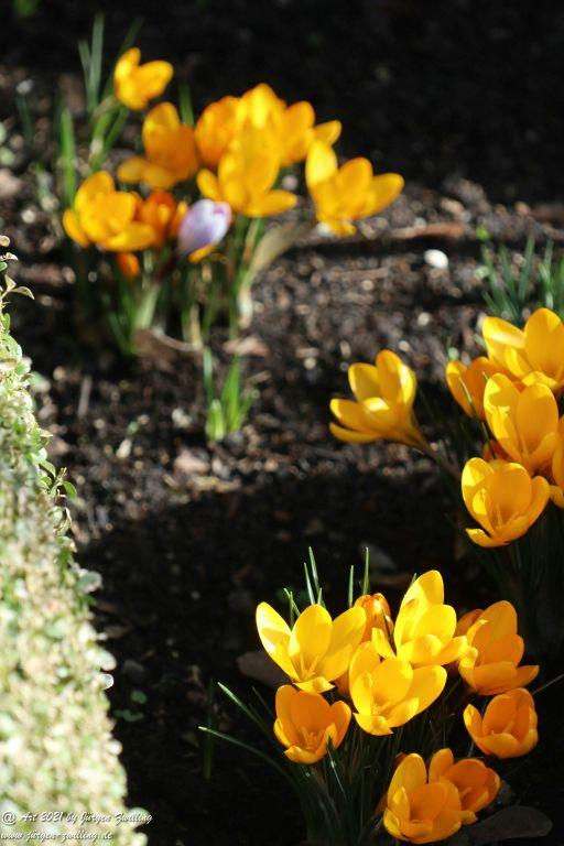 Frühlingsstart in Rheinhessen