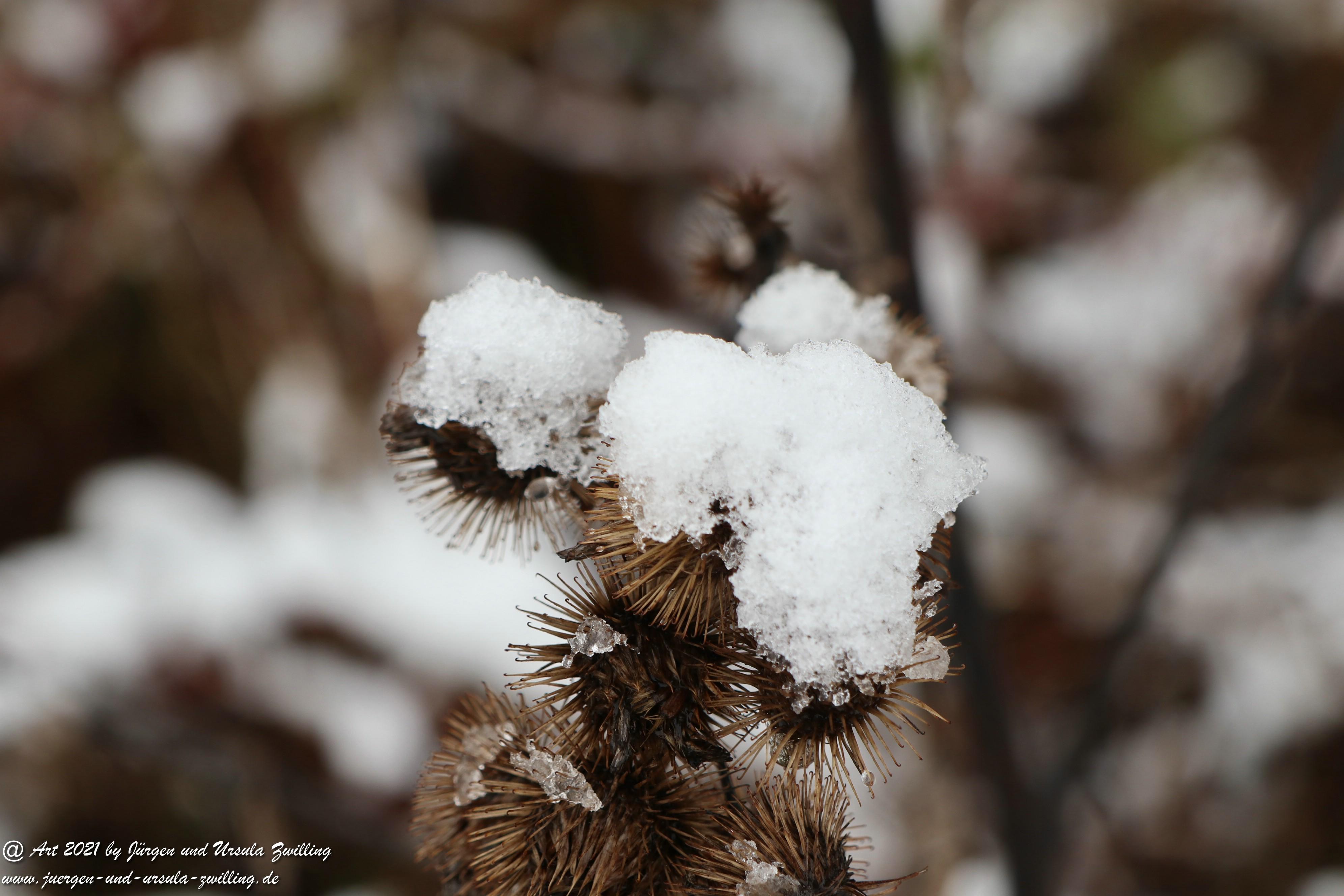 Rheinhessische Winterimpressionen  3