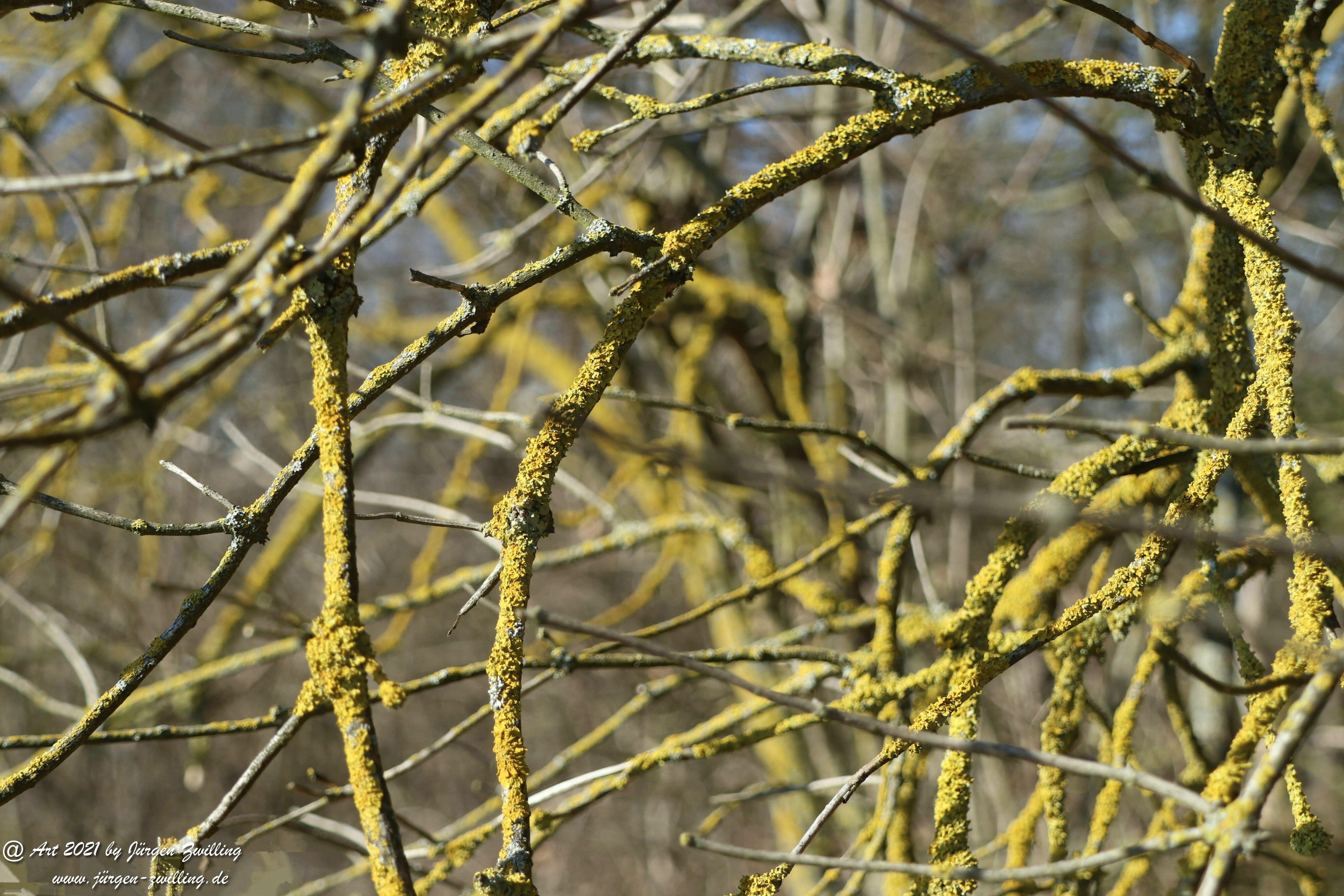 Frostiger Februar in Rheinhessen 7