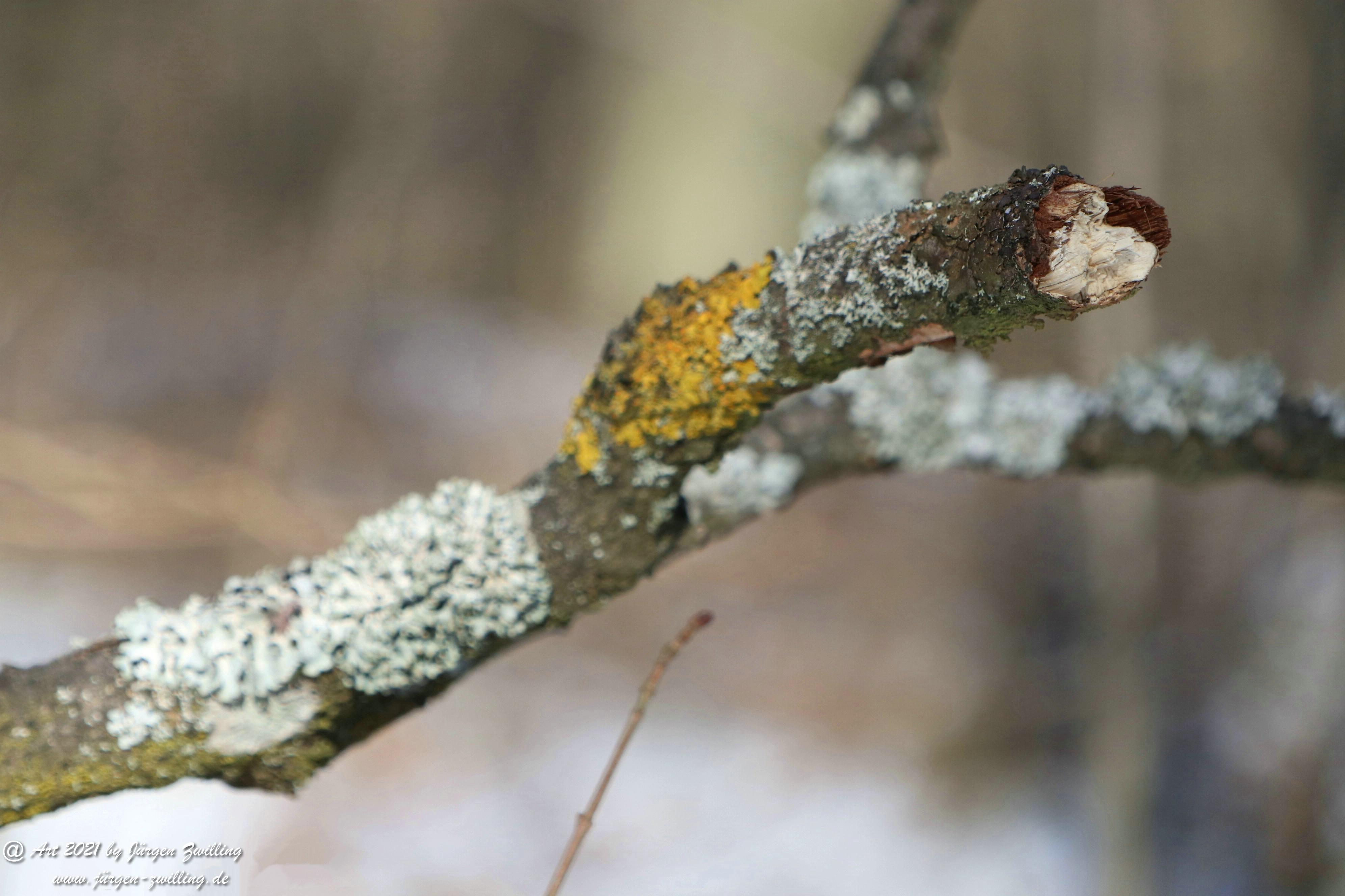 Frostiger Februar in Rheinhessen 11
