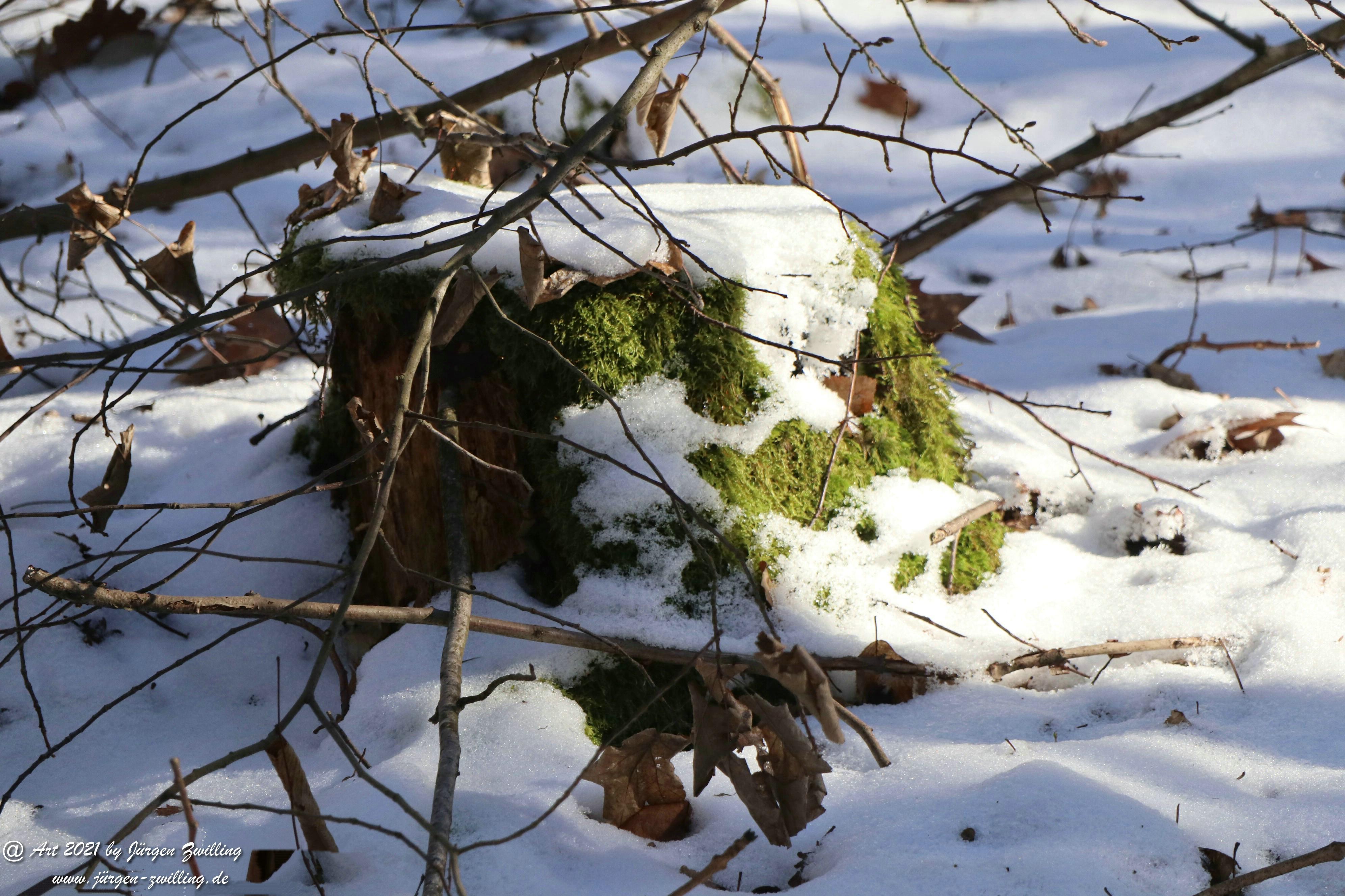 Frostiger Februar in Rheinhessen 12
