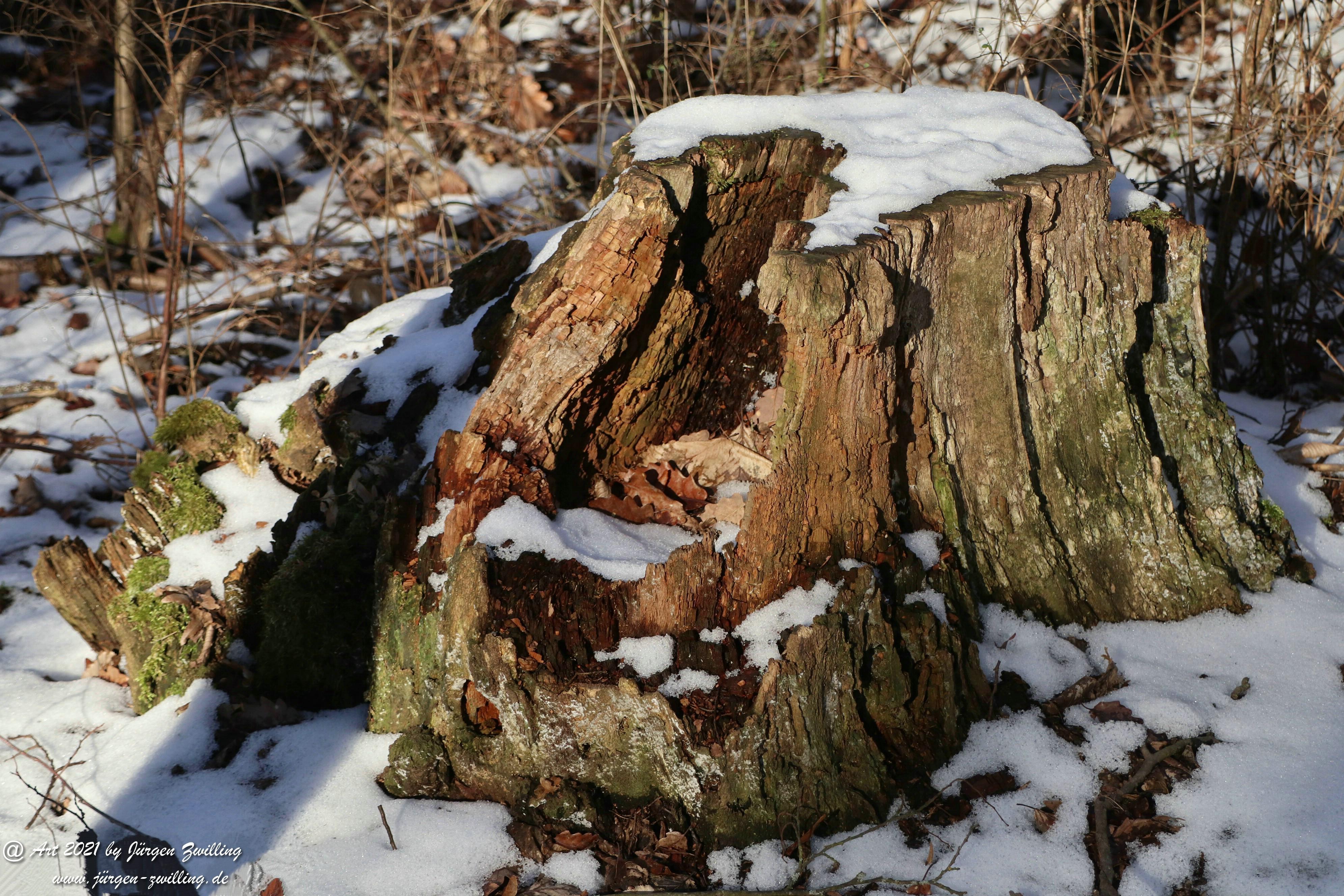 Frostiger Februar in Rheinhessen 13
