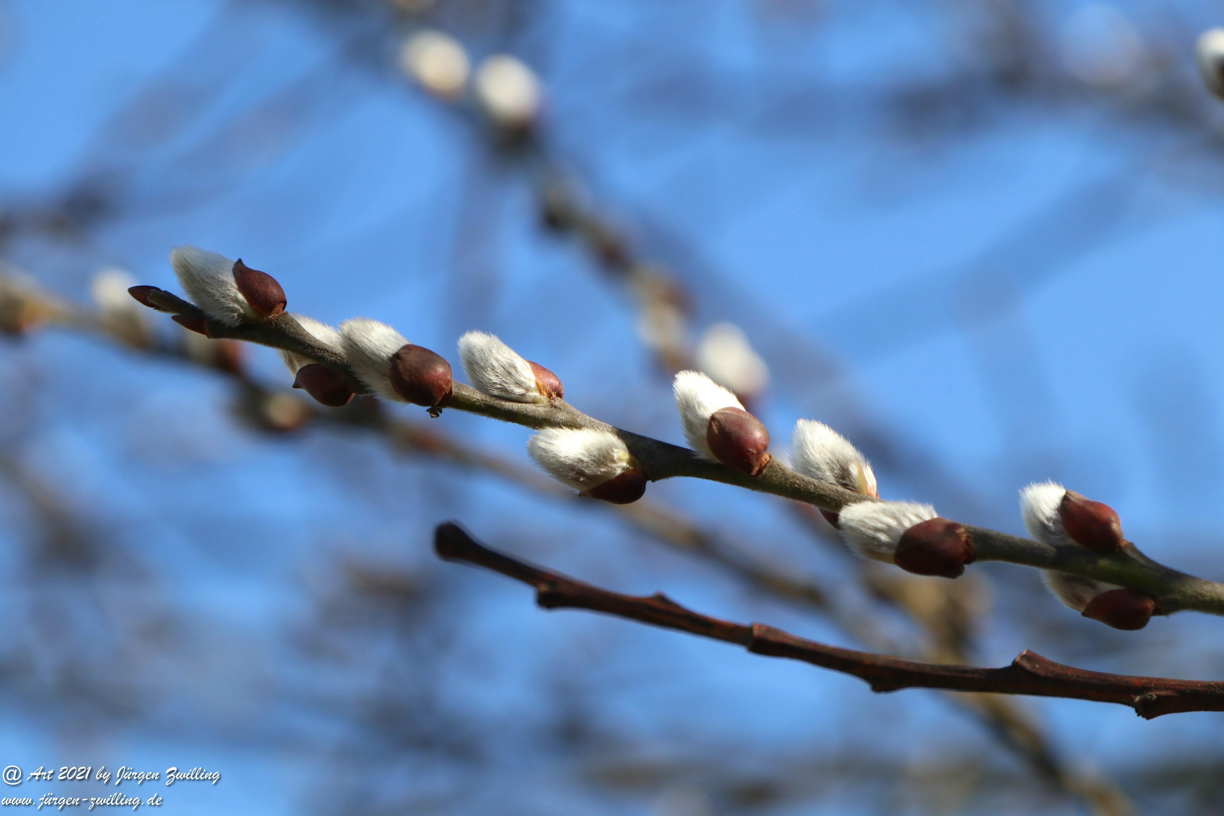 Frühlingsstart in Rheinhessen 4