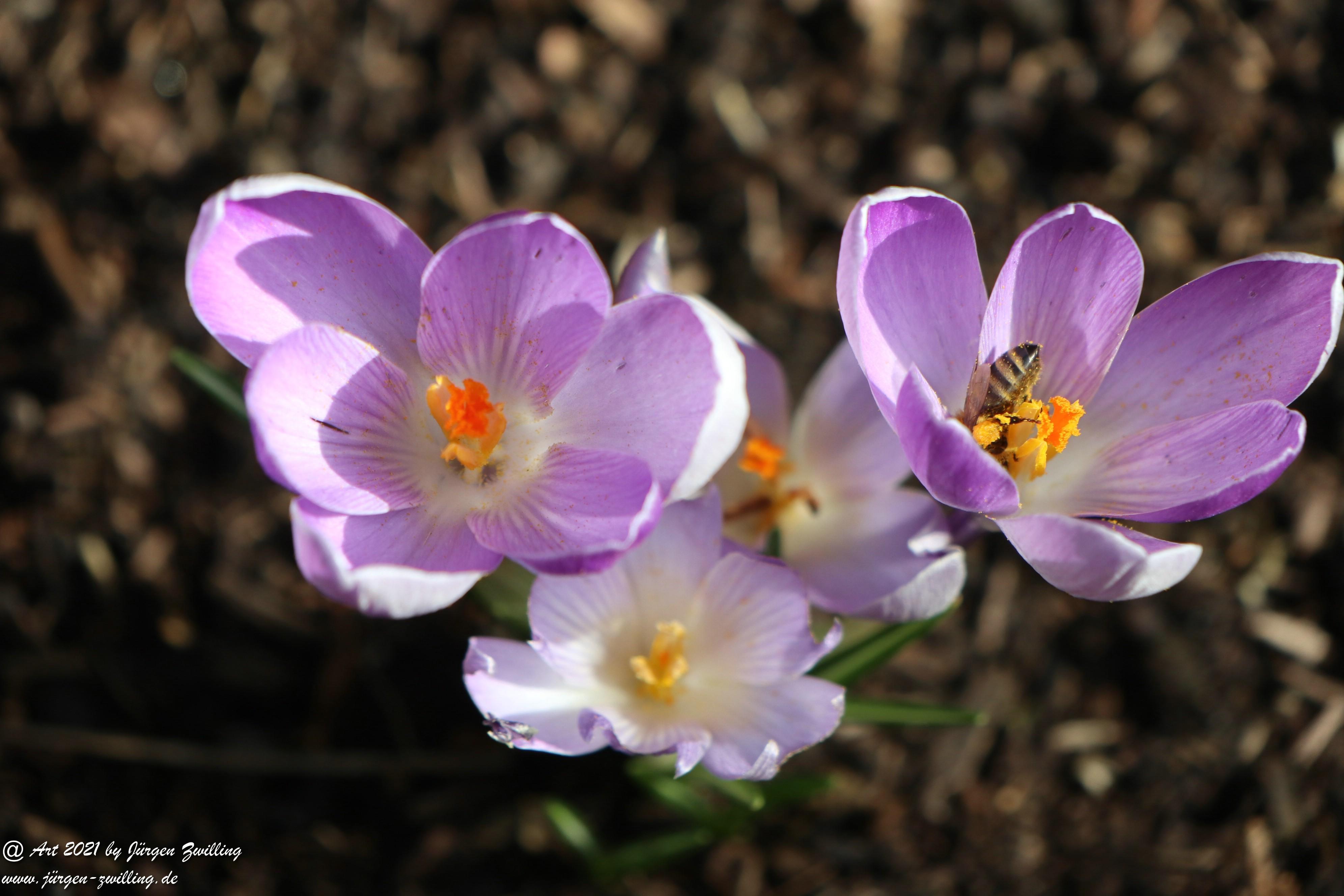 Frühlingsstart in Rheinhessen 13