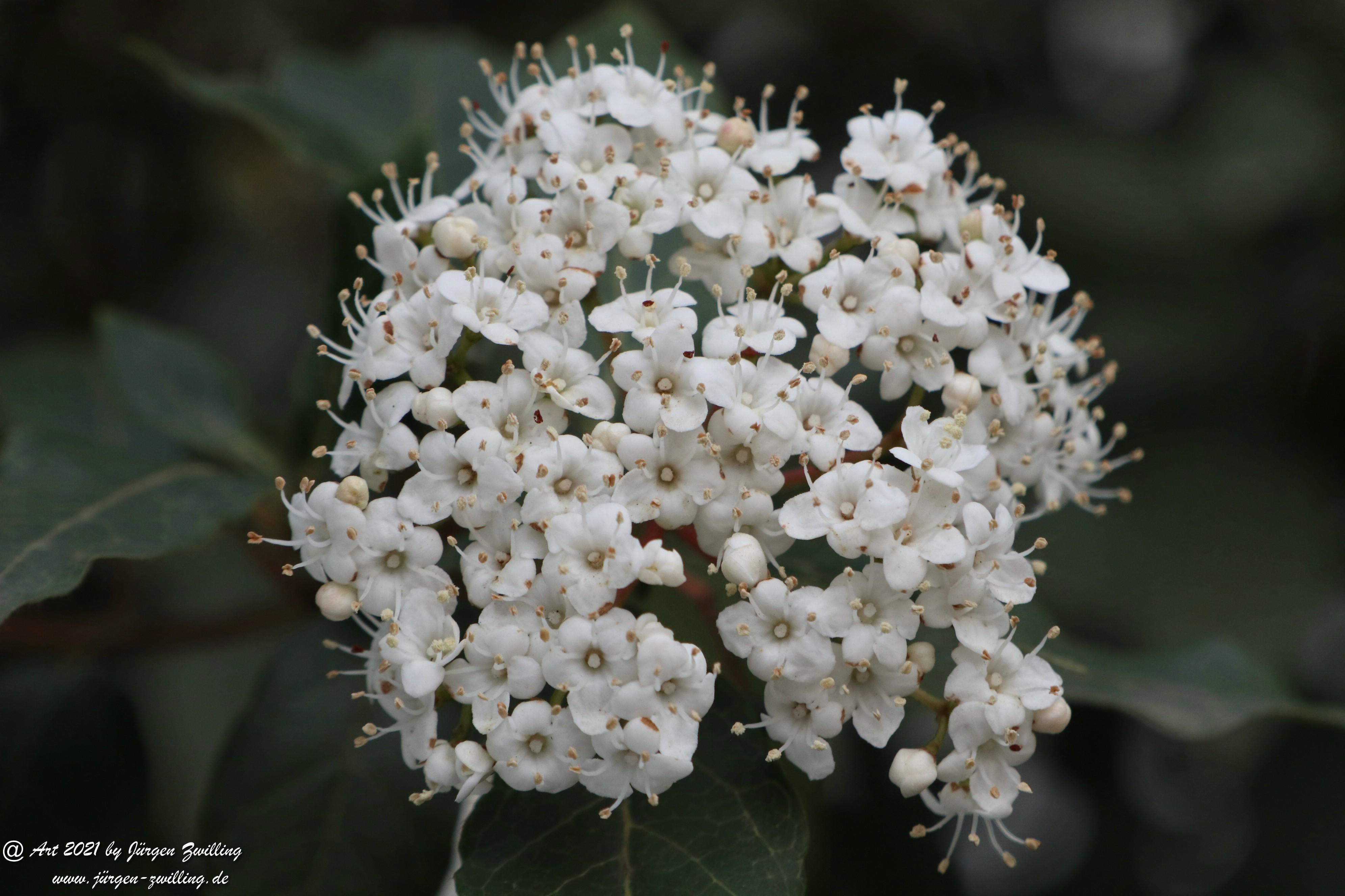 Twelve Native Milkweeds for Monarchs 1