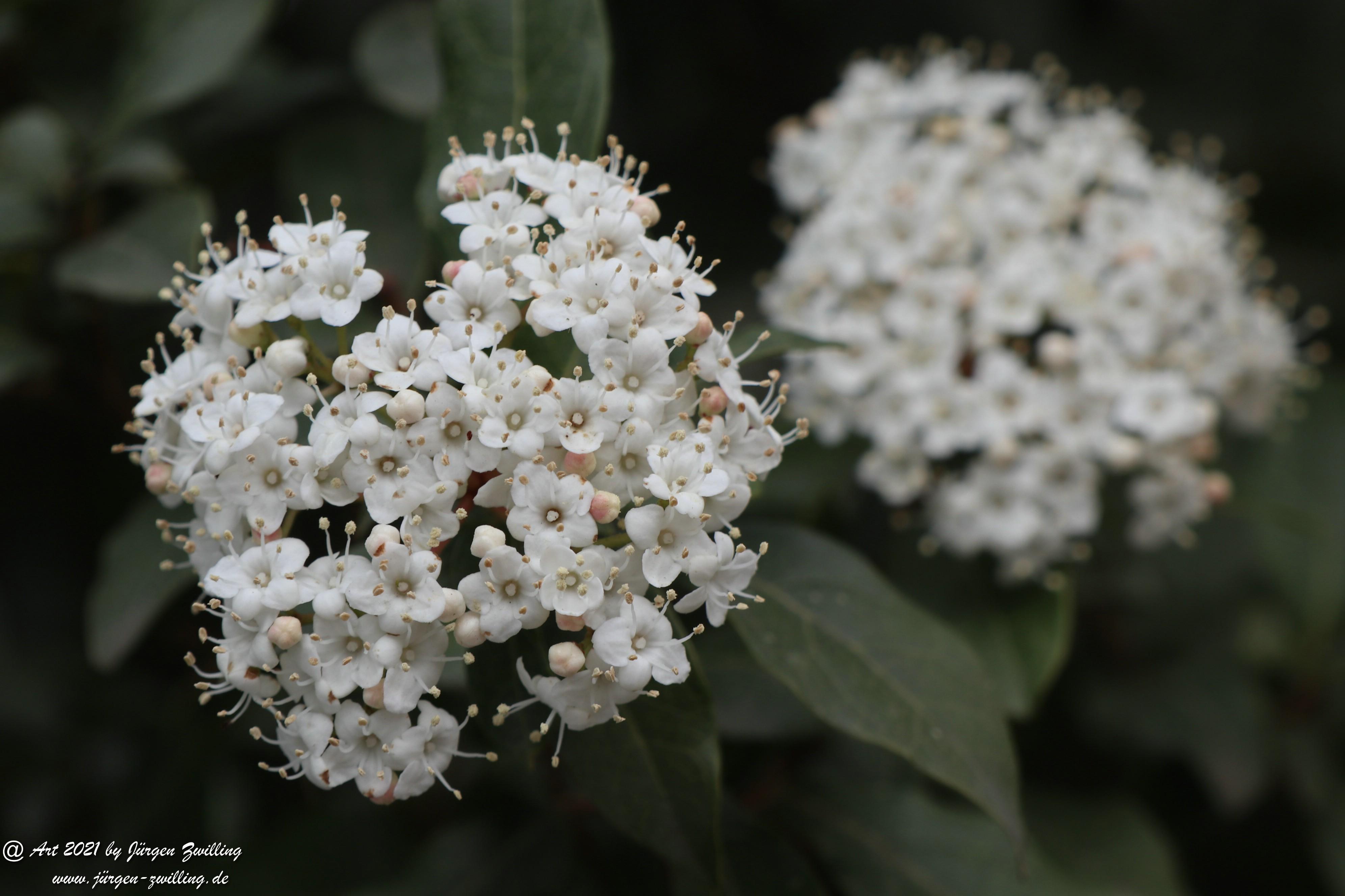 Twelve Native Milkweeds for Monarchs 2