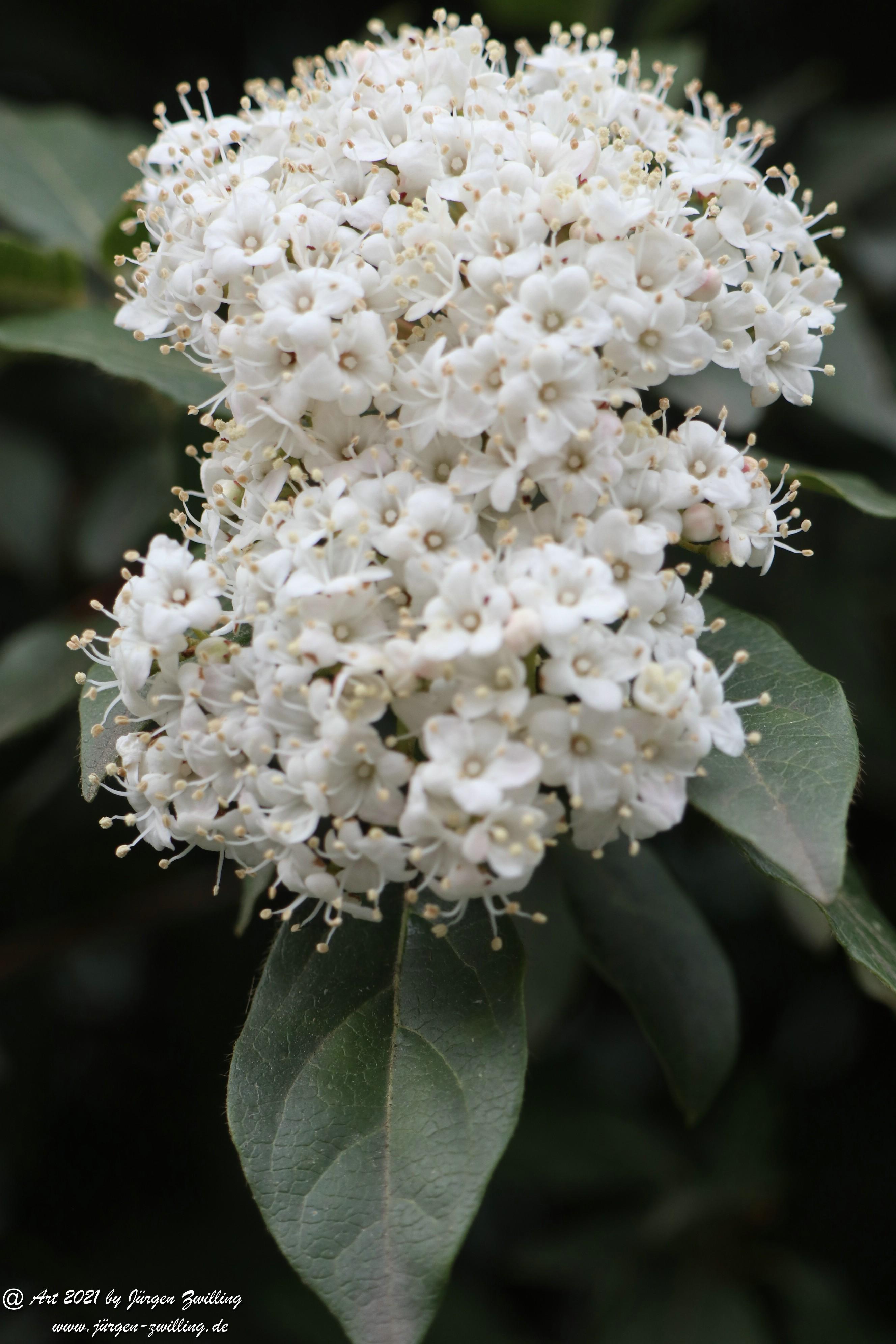 Twelve Native Milkweeds for Monarchs 3