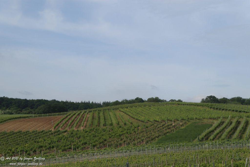 Juni - Weinberge  - Hackenheim - Rheinhessen