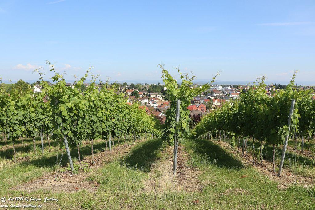 Juli- Weinberge  - Hackenheim - Rheinhessen