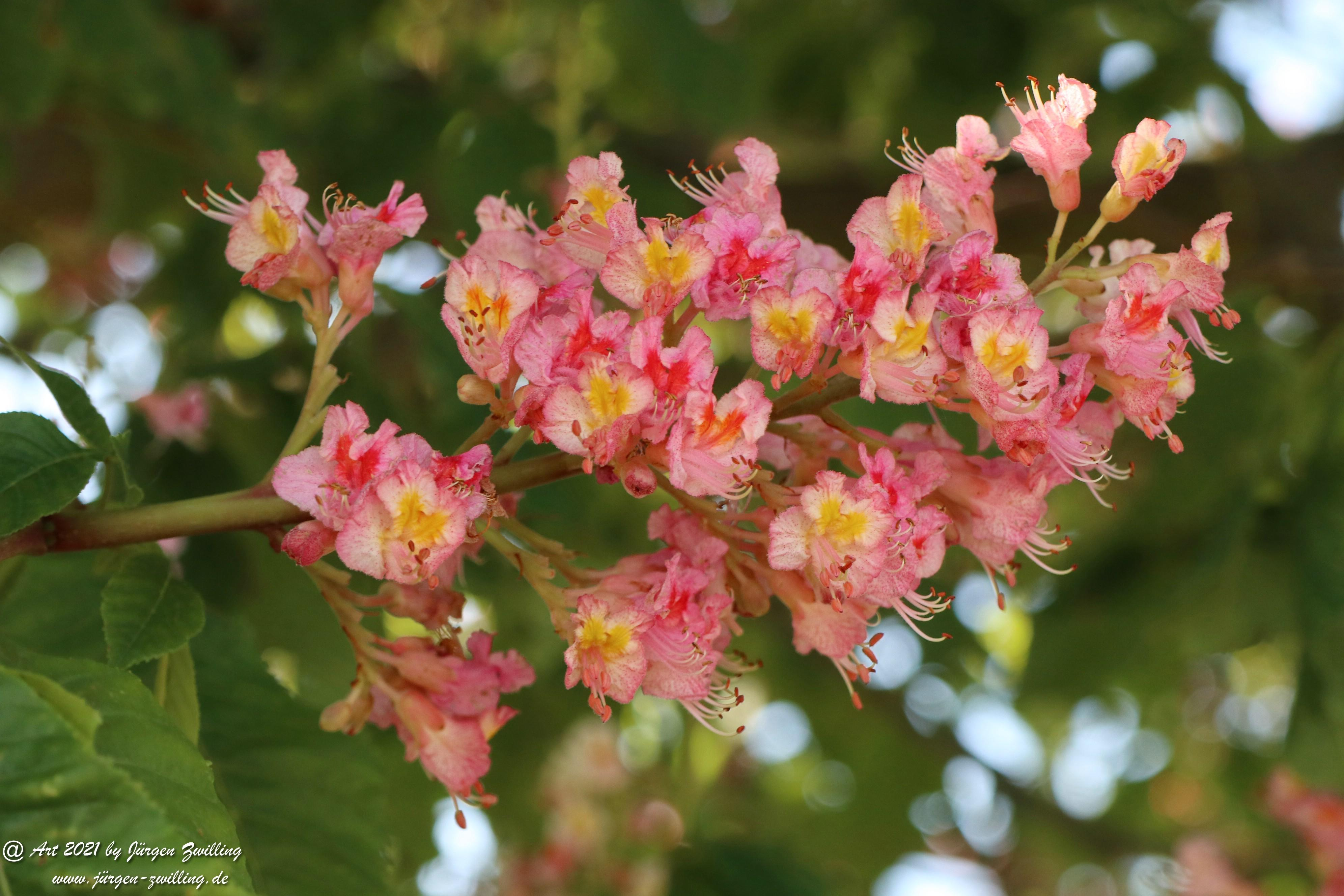 Kastanienbaum 2