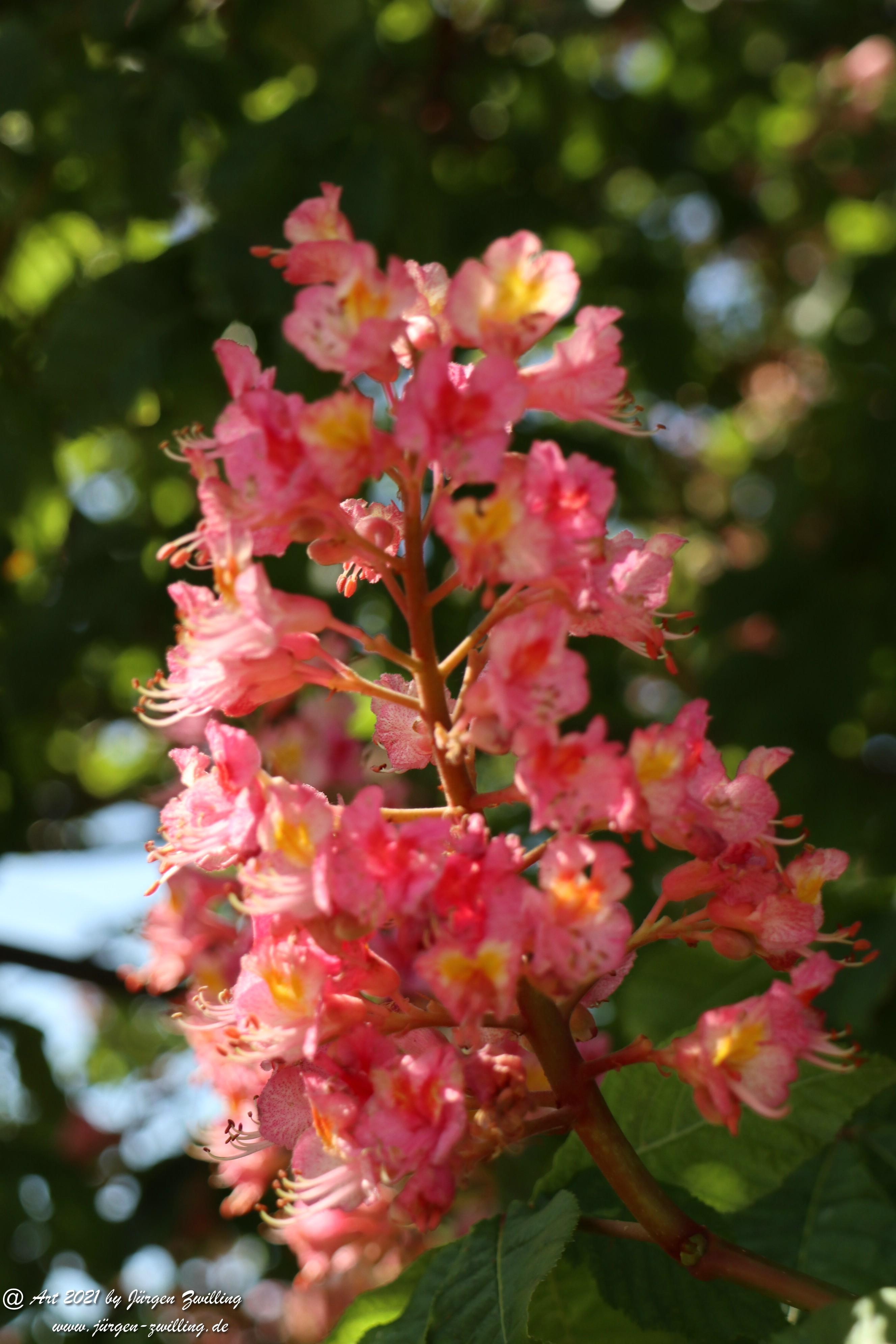 Kastanienbaum 4