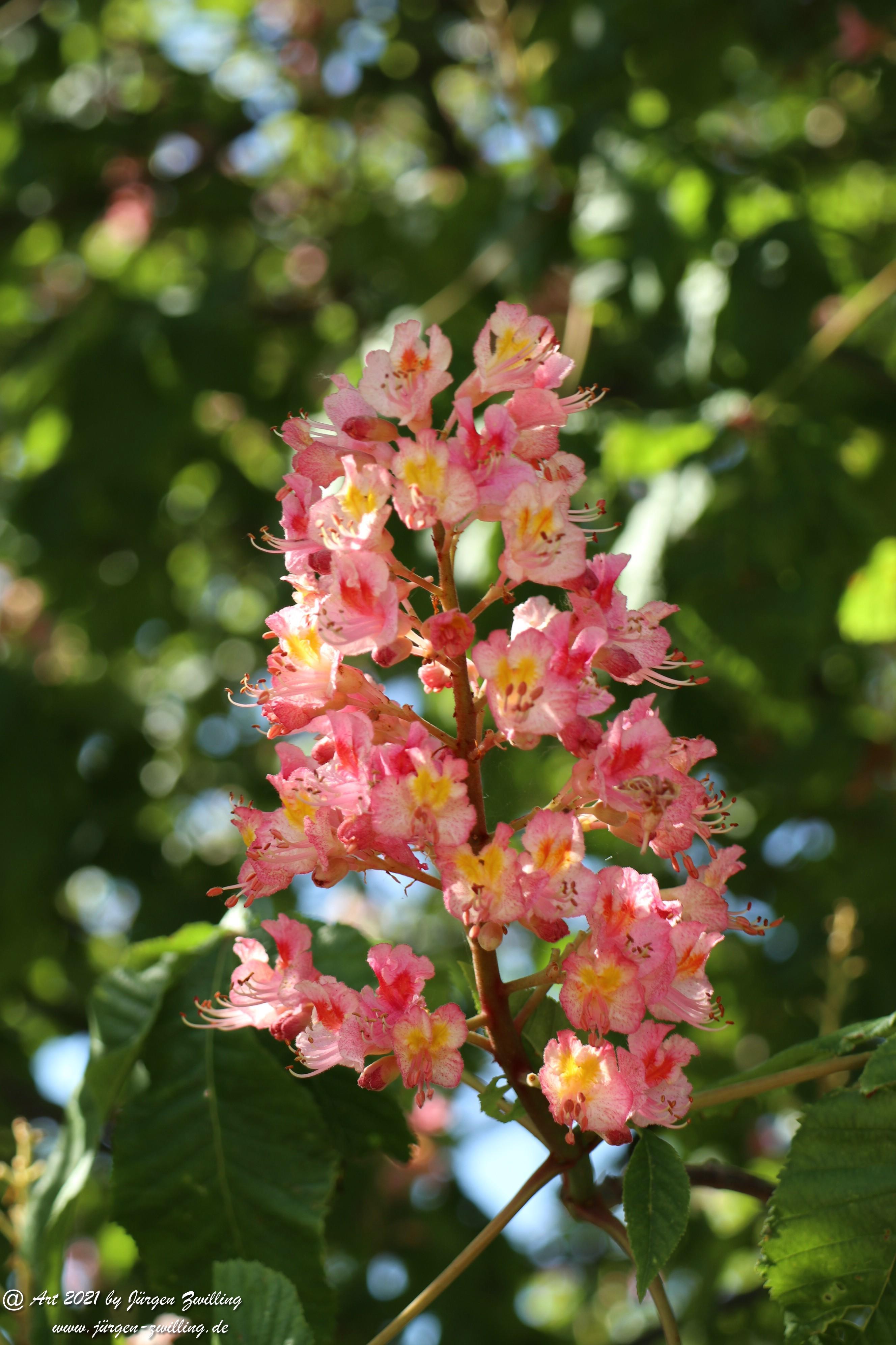 Kastanienbaum 5