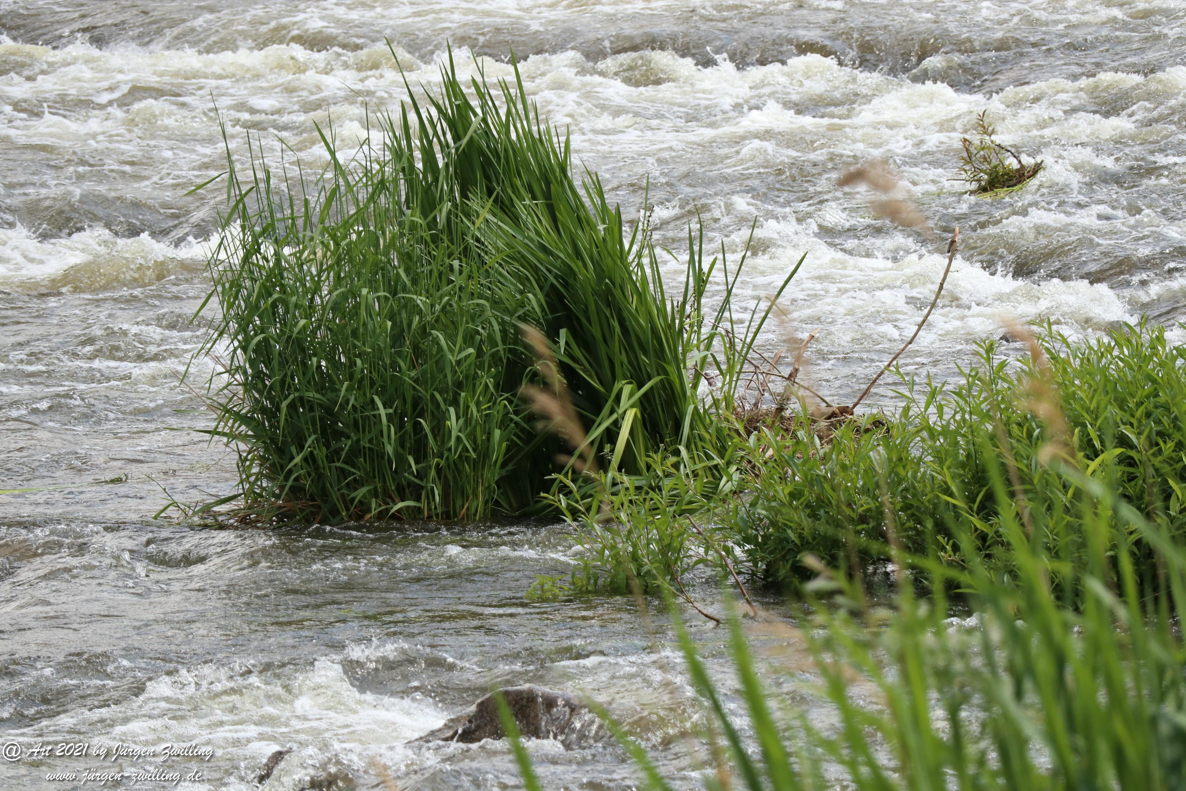 Wilde Wasser 8
