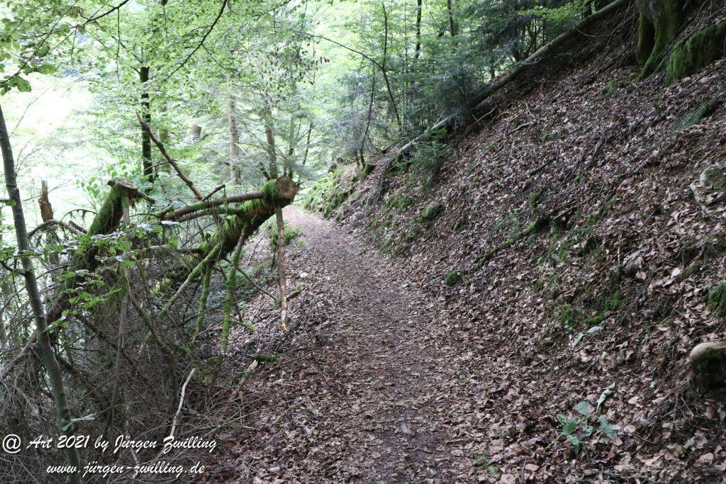 Philosophische Bildwanderung  Klösterle Schleife - Burgbach Wasserfall - Bad Rippoldsau - Schwarzwald