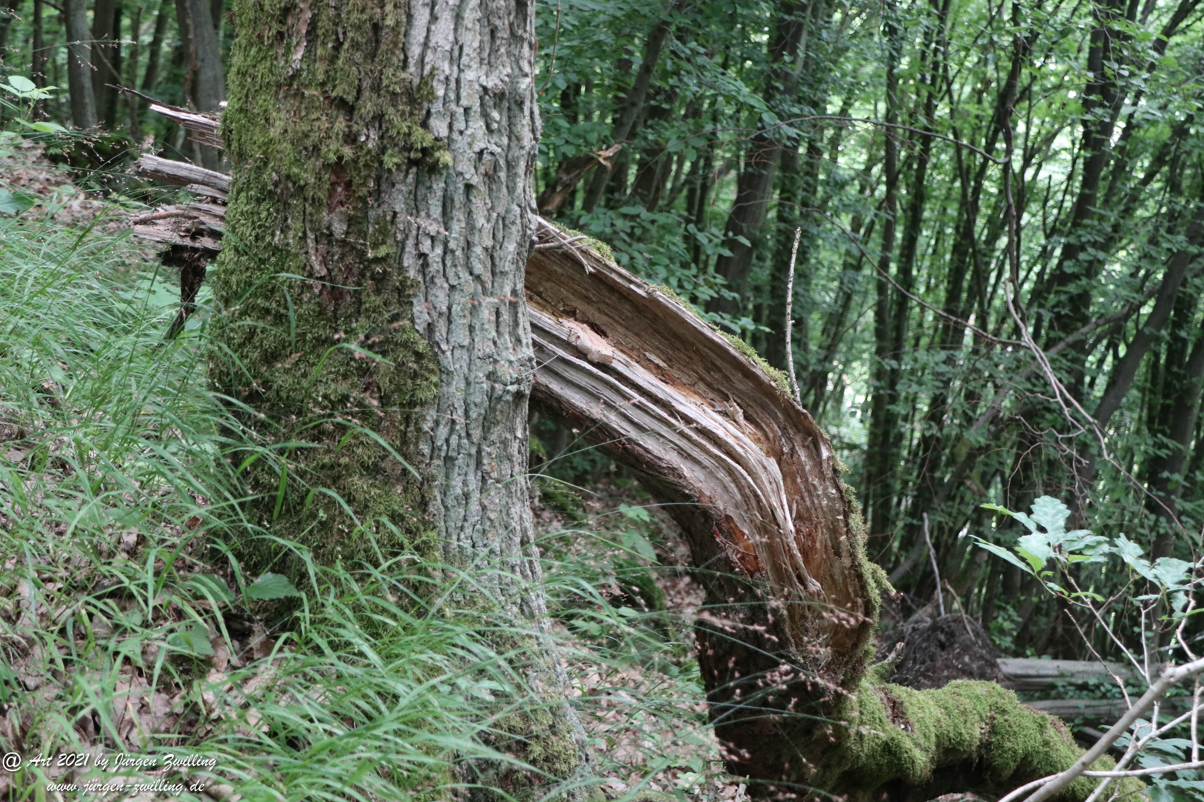 Waldholz 1