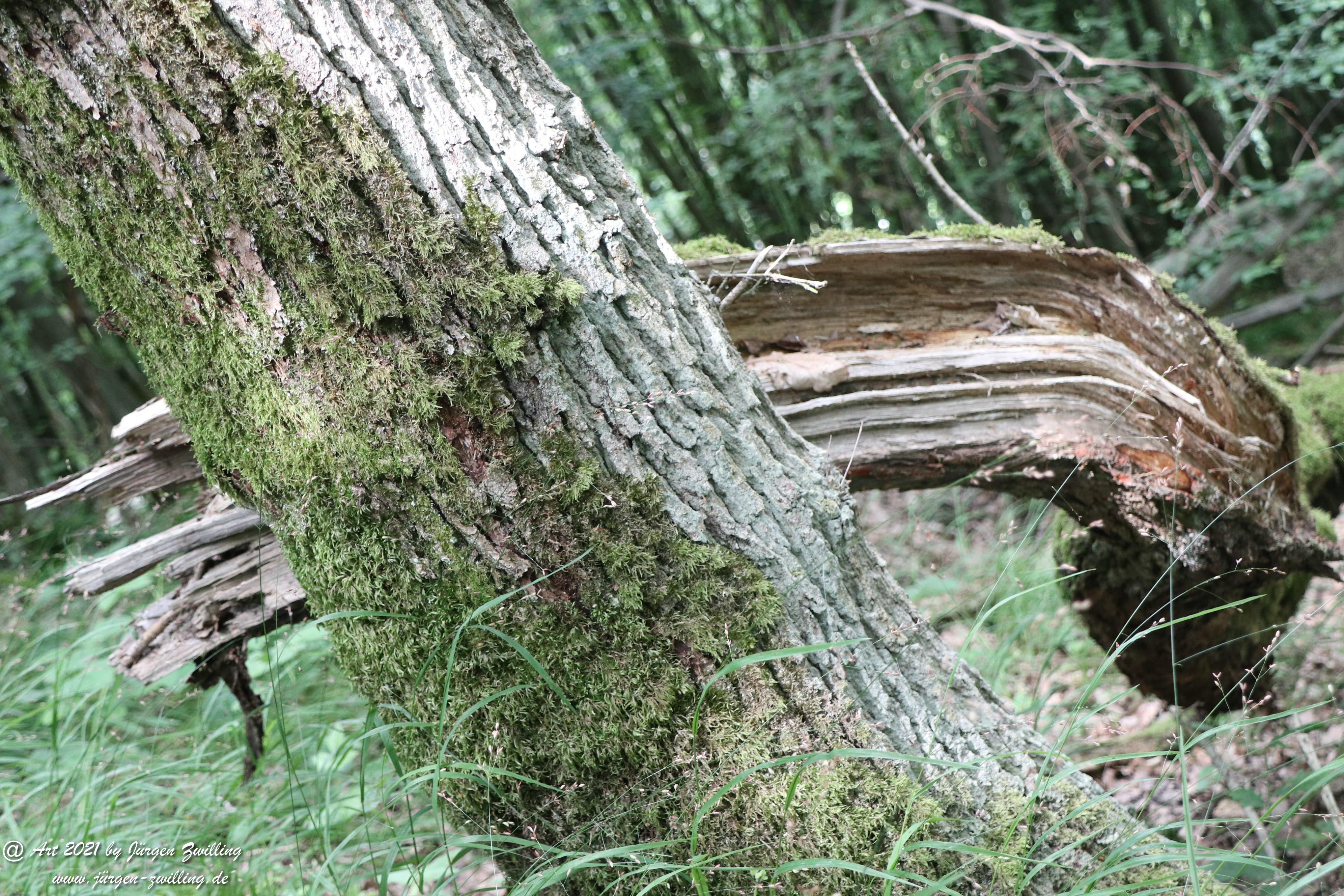 Waldholz 2