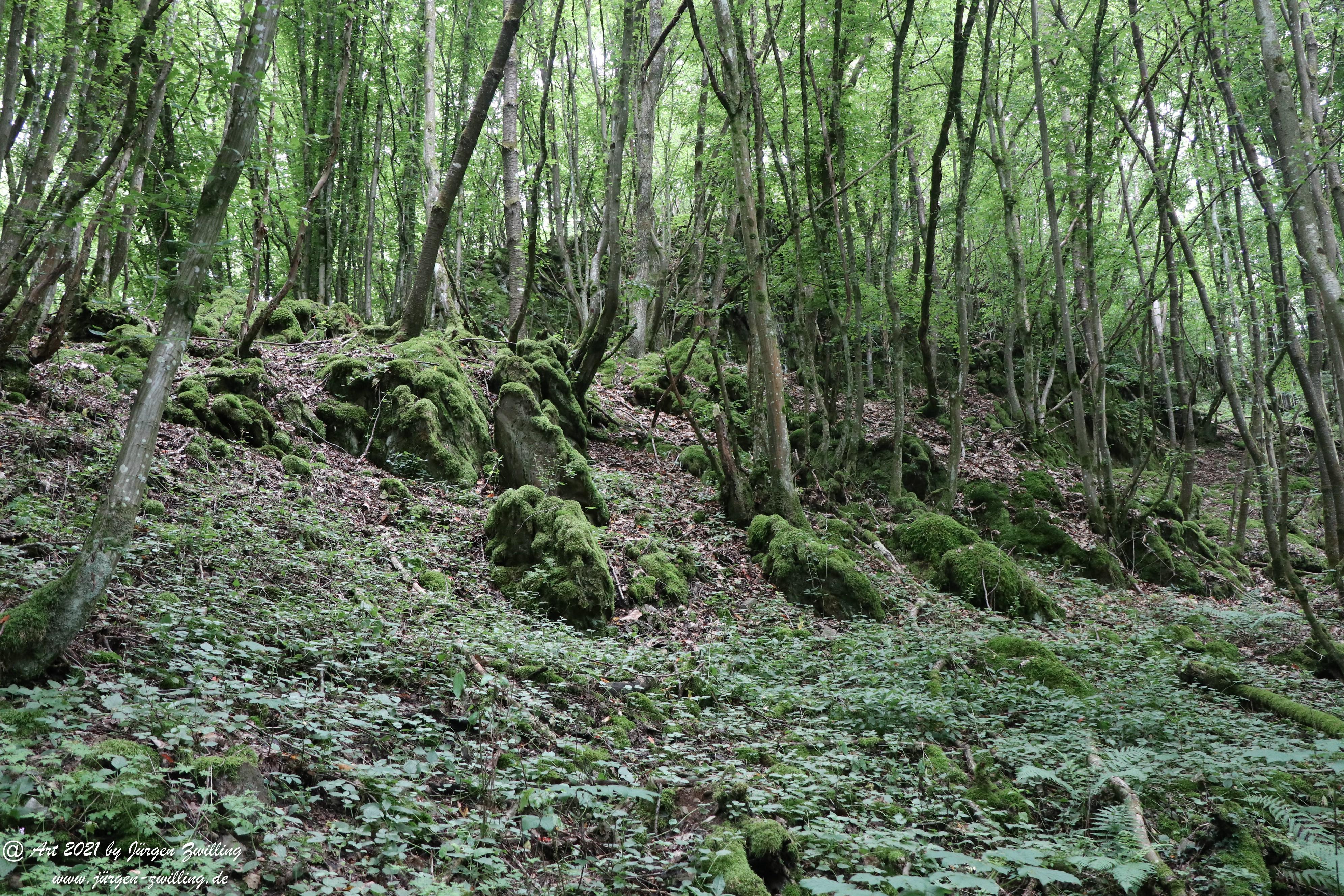 Waldholz 4
