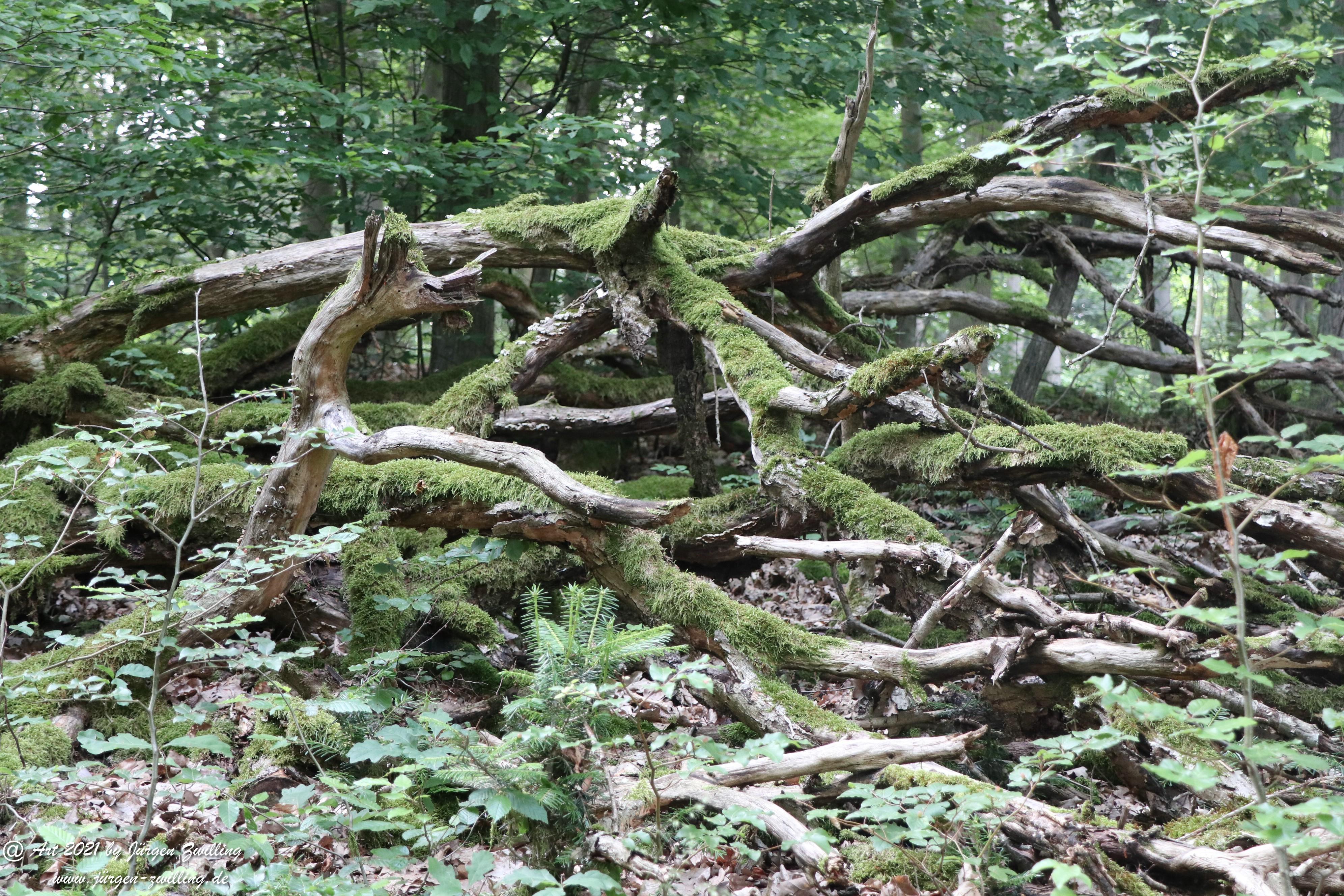 Waldholz 6