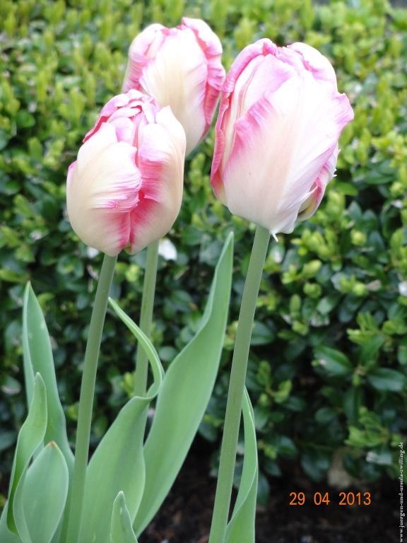 29.04.2013 Garten