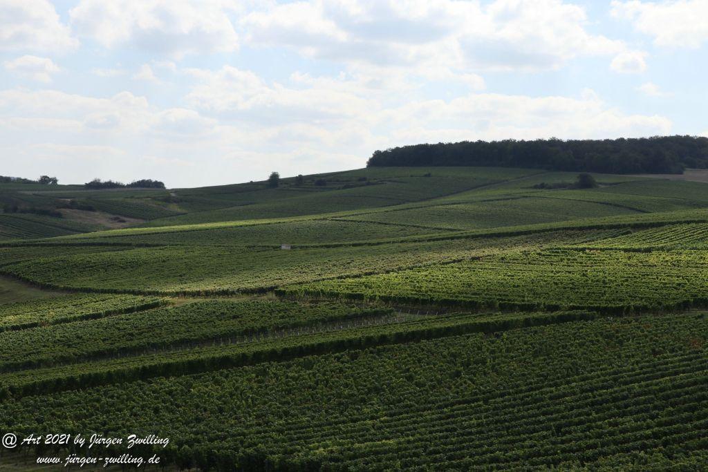 September -Weinberg - Hackenheim - Rheinhessen