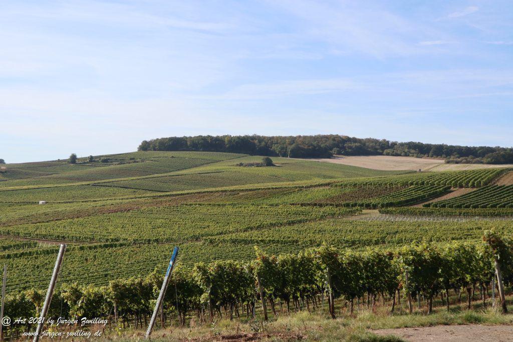 Oktober -Weinberge  - Hackenheim - Rheinhessen